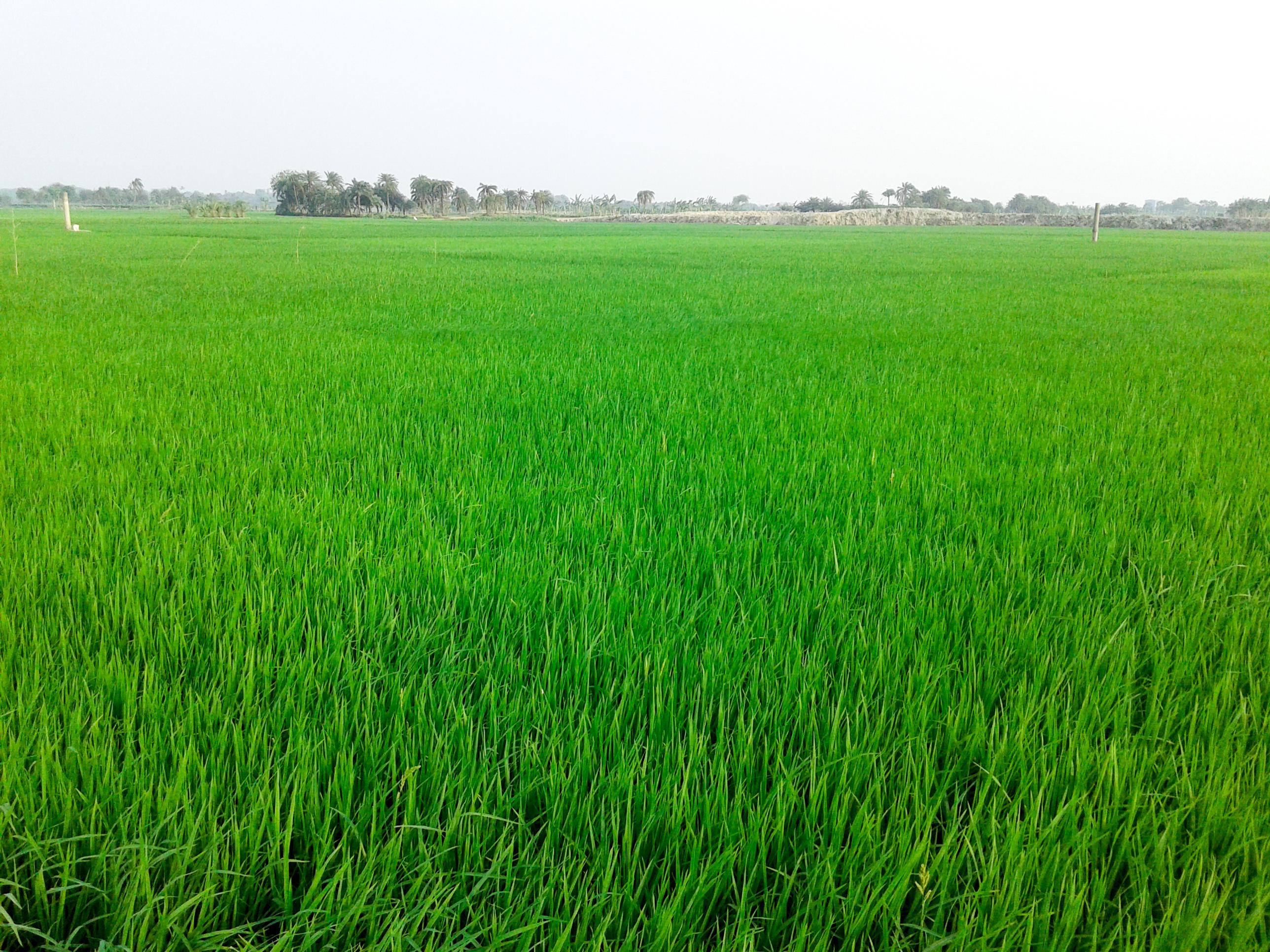 File:Green Crops.jpeg - Wikimedia Commons