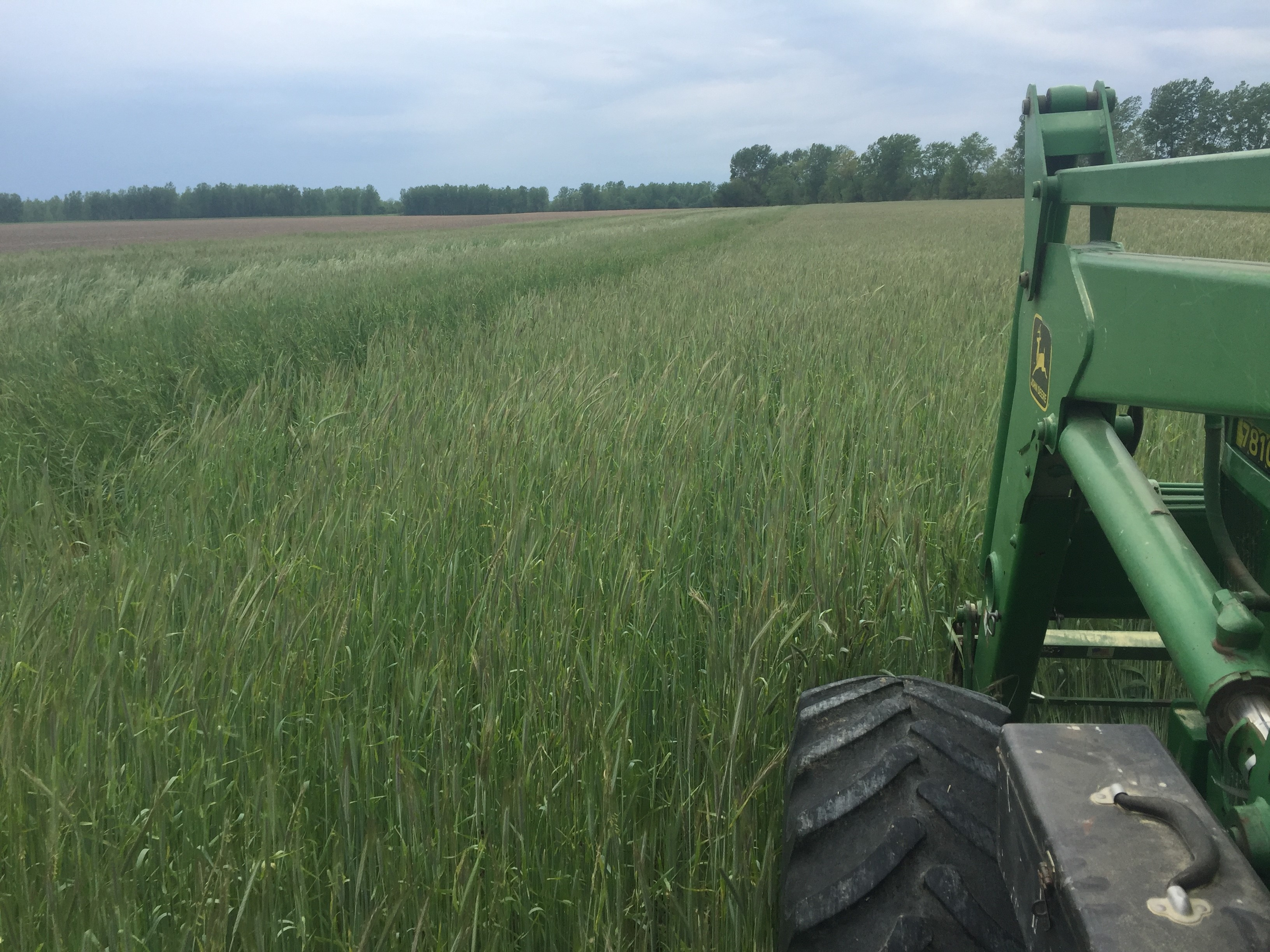 Cover Crops: Seeing Green in Post-Harvest Fields | Missouri Soybeans