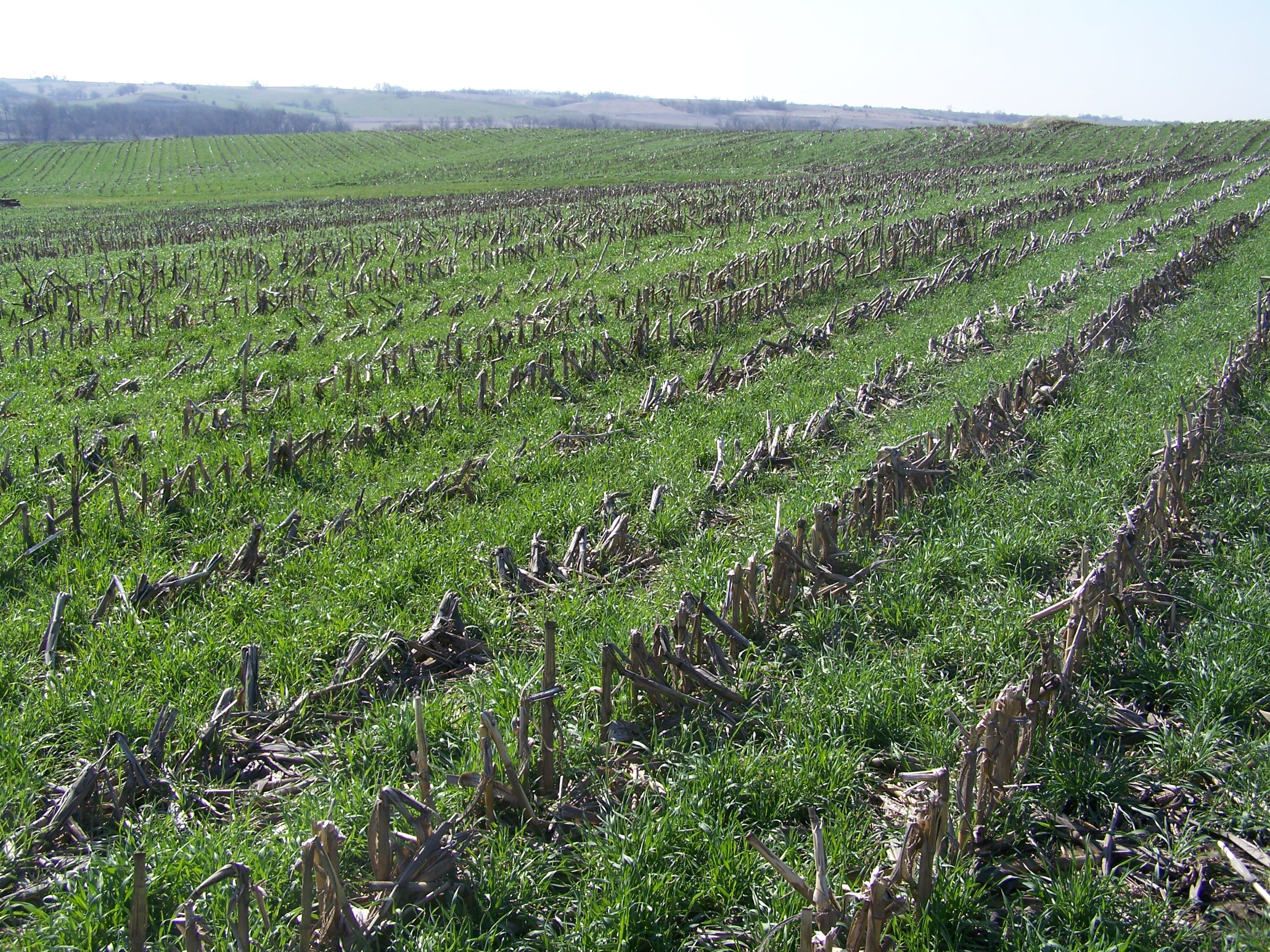 Study of Iowa Farmers Finds 23% Using Cover Crops - Practical ...