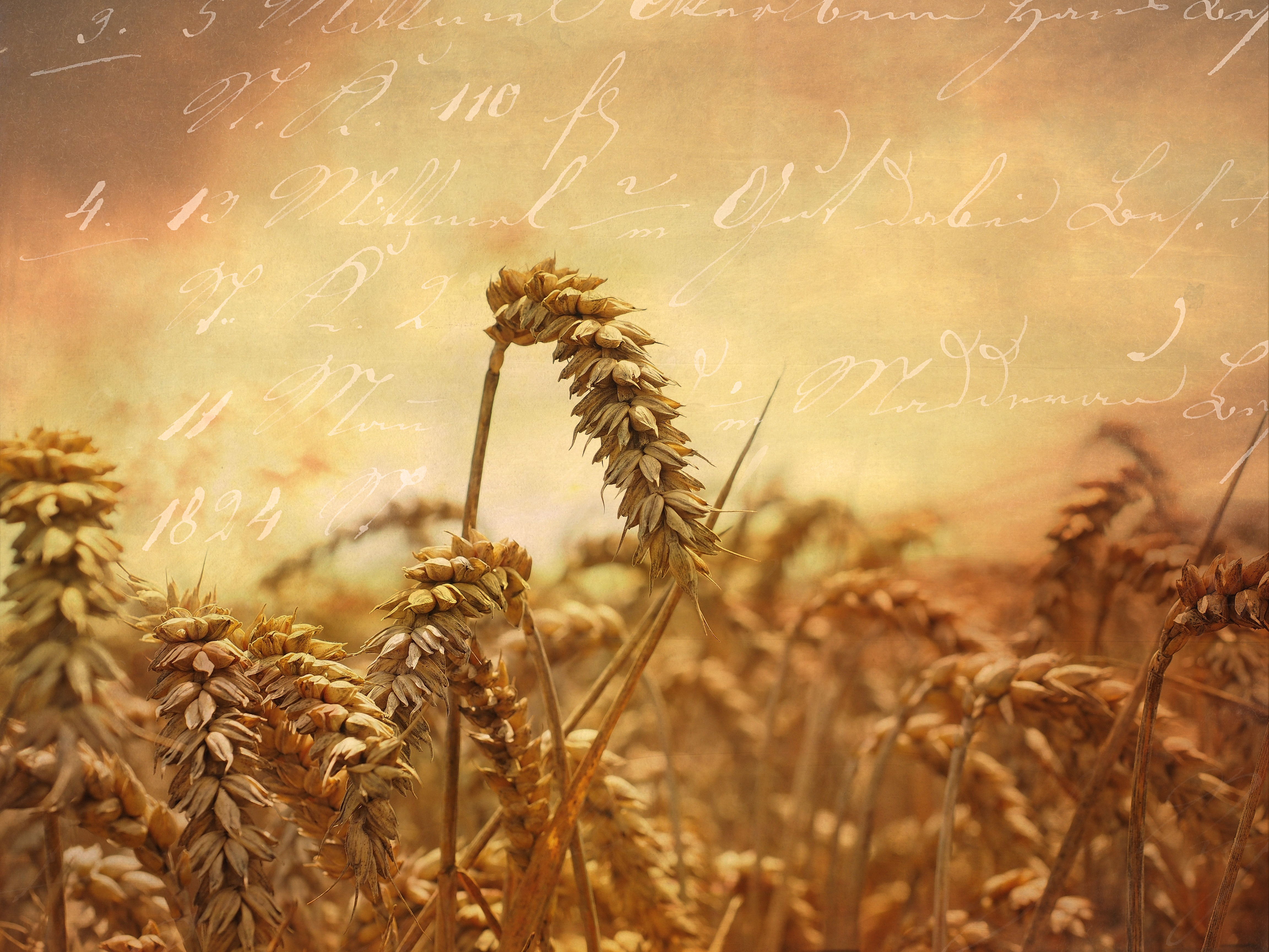 Crops, Brown, Field, Nature, Plants, HQ Photo