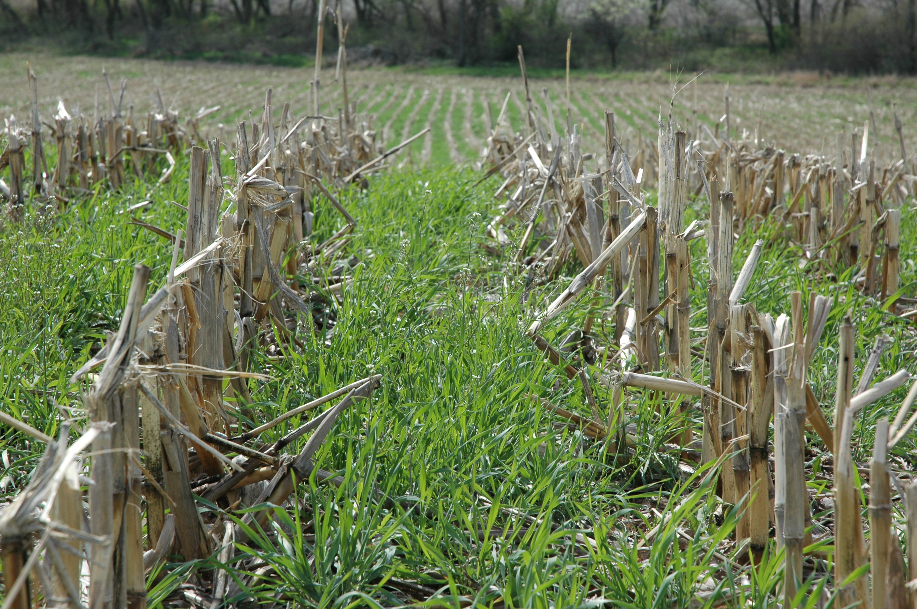 Many proven benefits have cover crops gaining interest – Ohio Ag Net ...