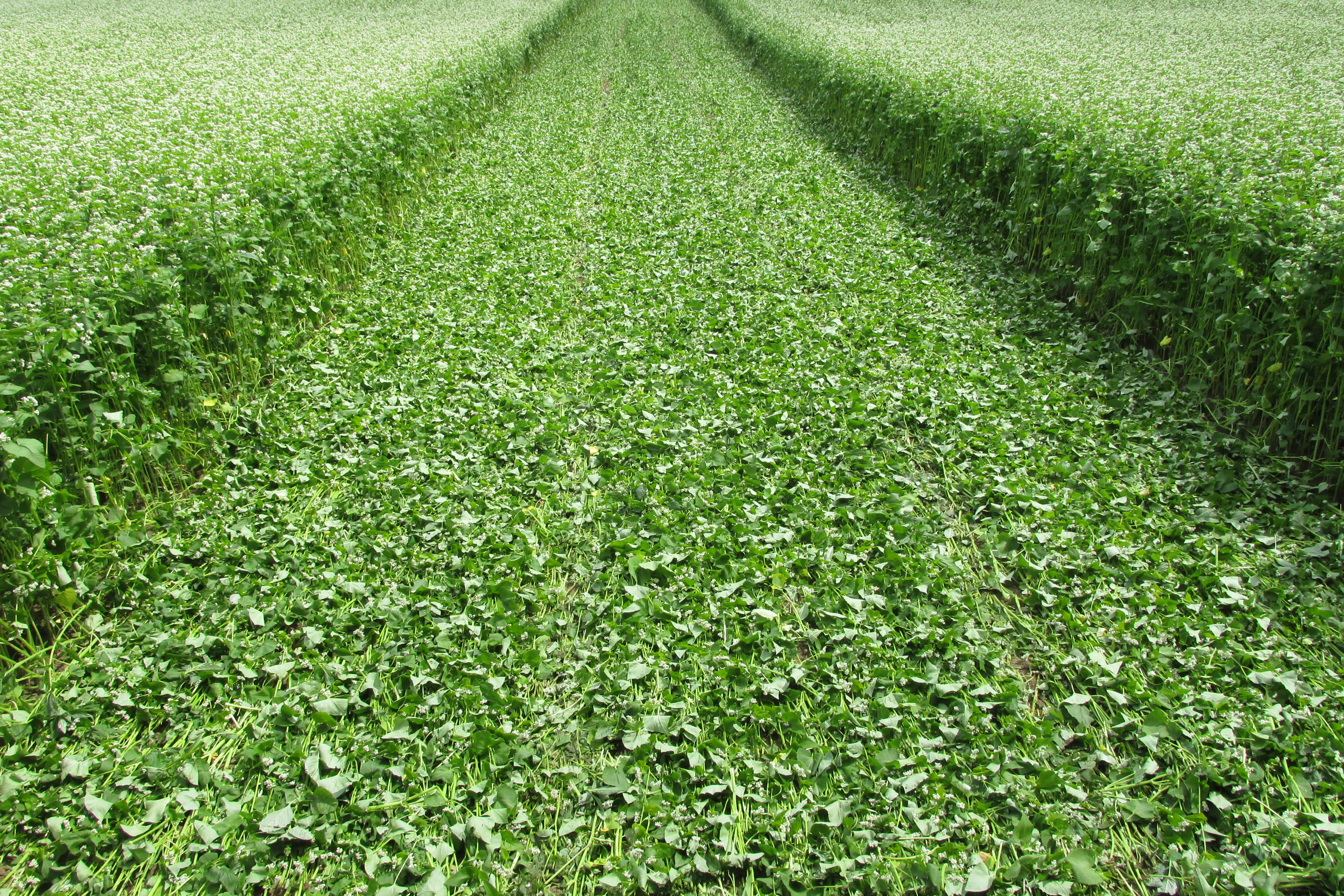 """Cover Crops in Wisconsin"""" Website Launched : Michael Fields ..."""