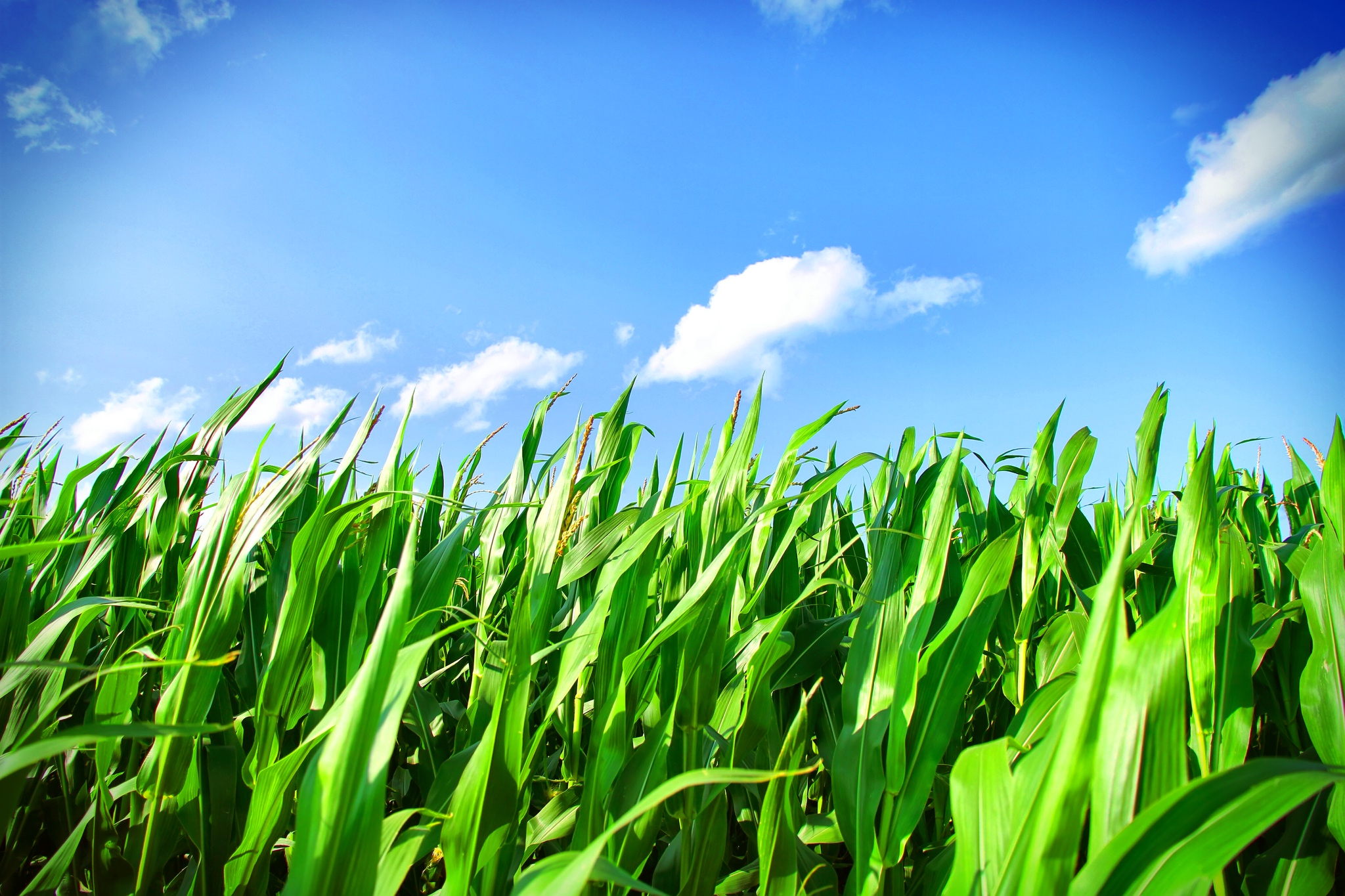Clydesdale Agronomy | Healthy Soil, Healthy Crops.