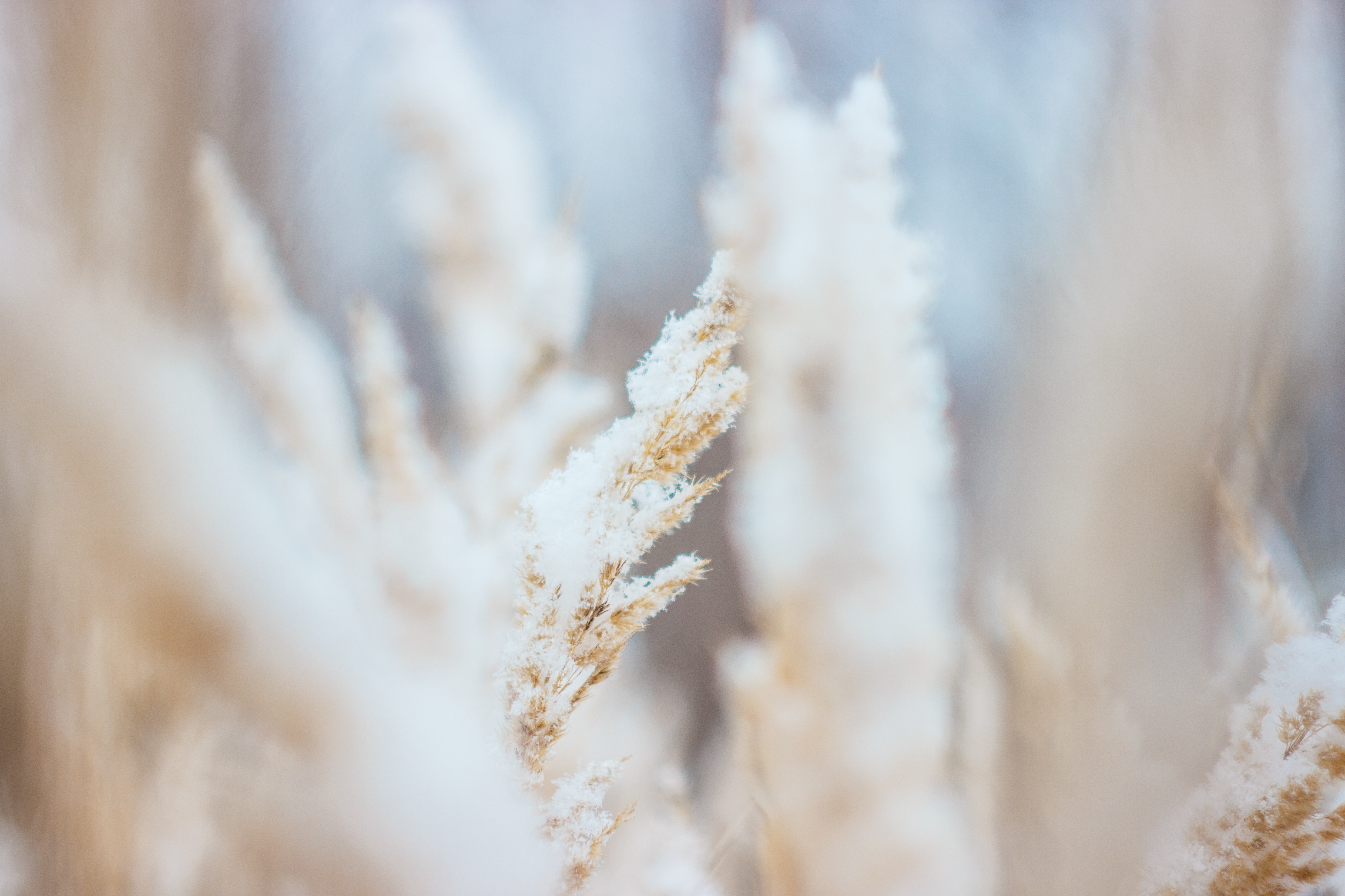 Crops, Plants, Nature, Brown, Blur, HQ Photo