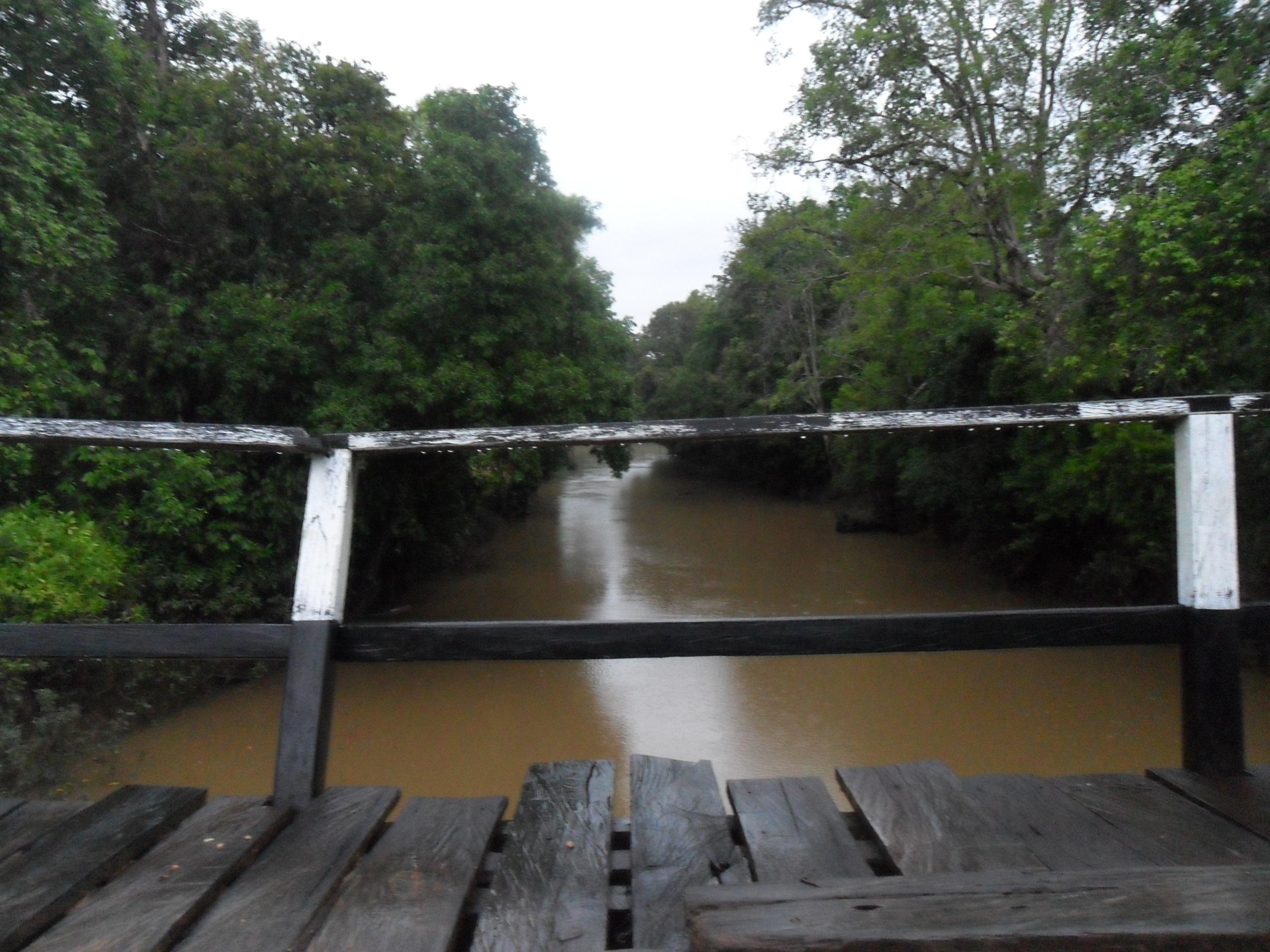 Cross the river, Bridge, Forest, River, Wood, HQ Photo