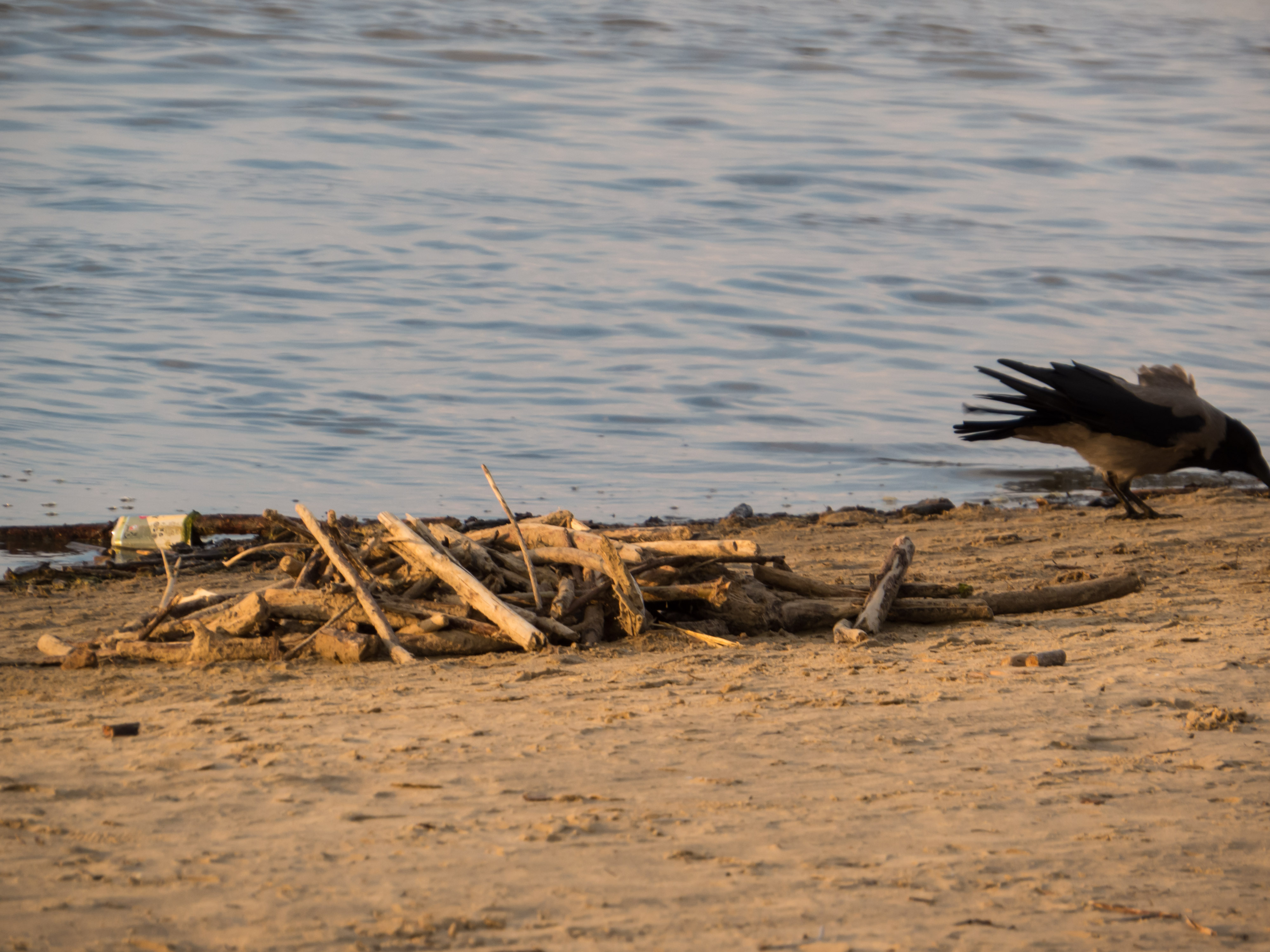 Crow on the beach, Wood, Rocks, Water, Stack, HQ Photo