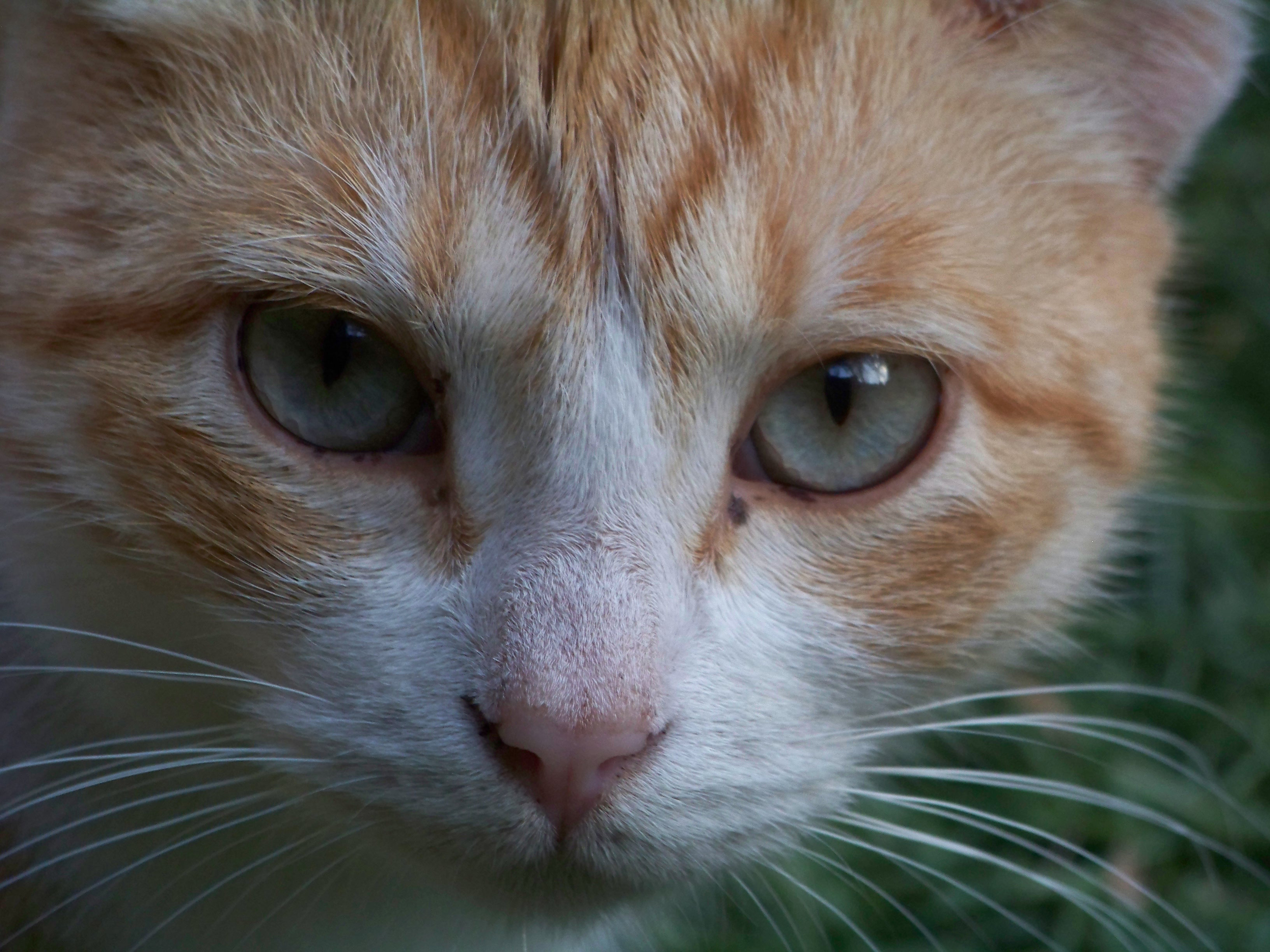 Curiosity, Animal, Cat, Closeup, Curious, HQ Photo
