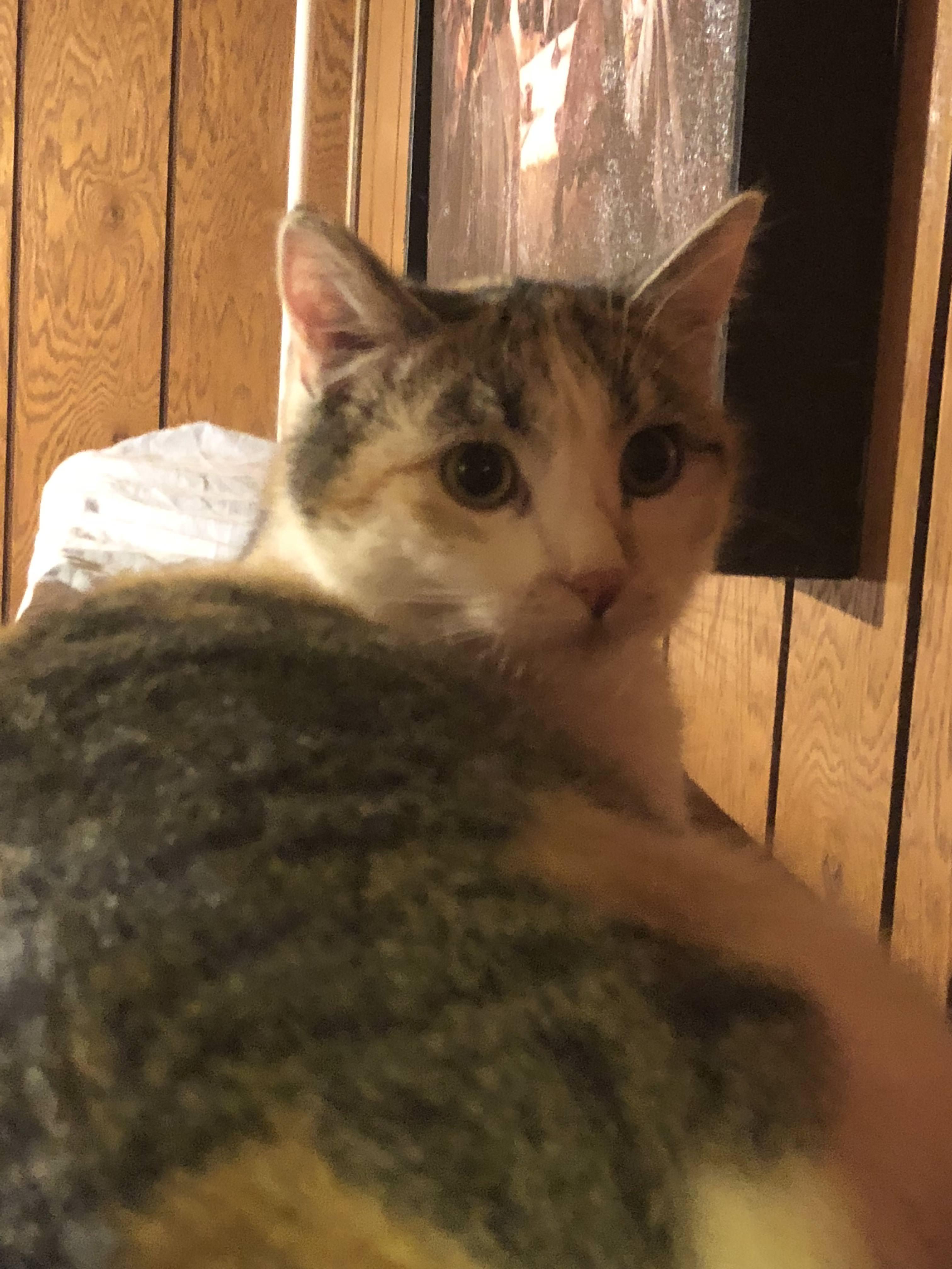 Curious Kitty - Album on Imgur