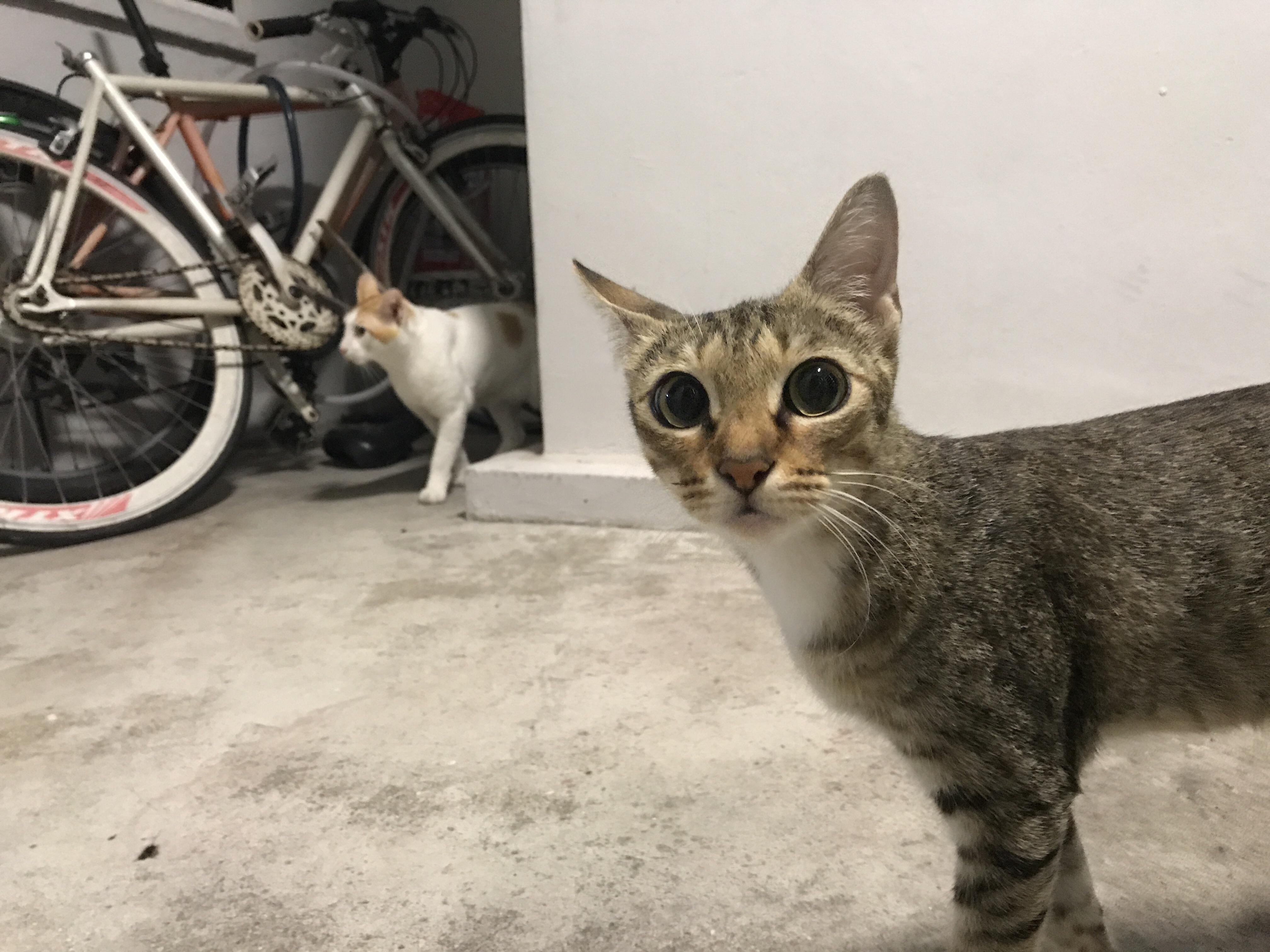 Curious kitty : aww