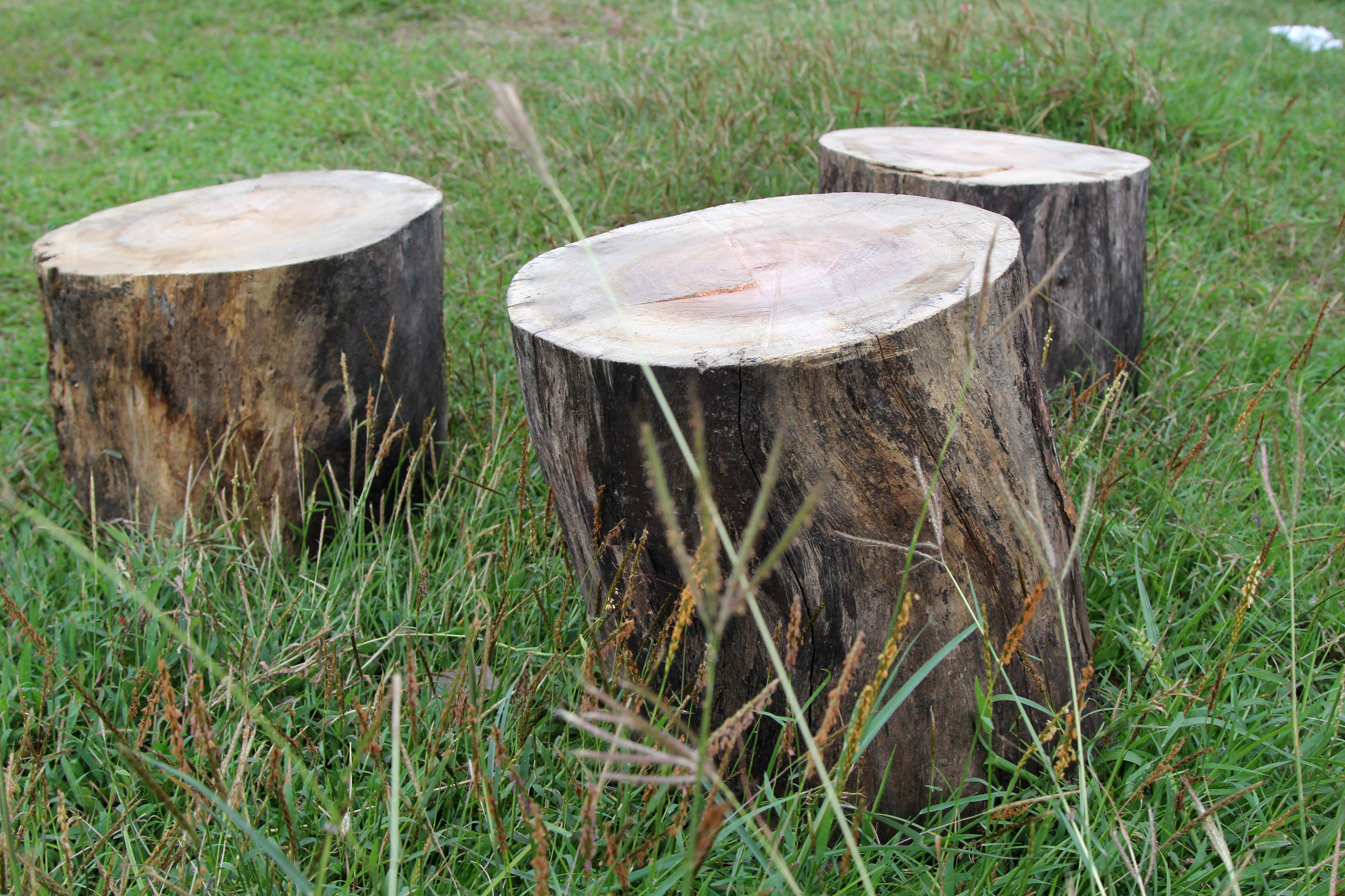 How to Make a Stool from an Old Tree Trunk: 7 Steps