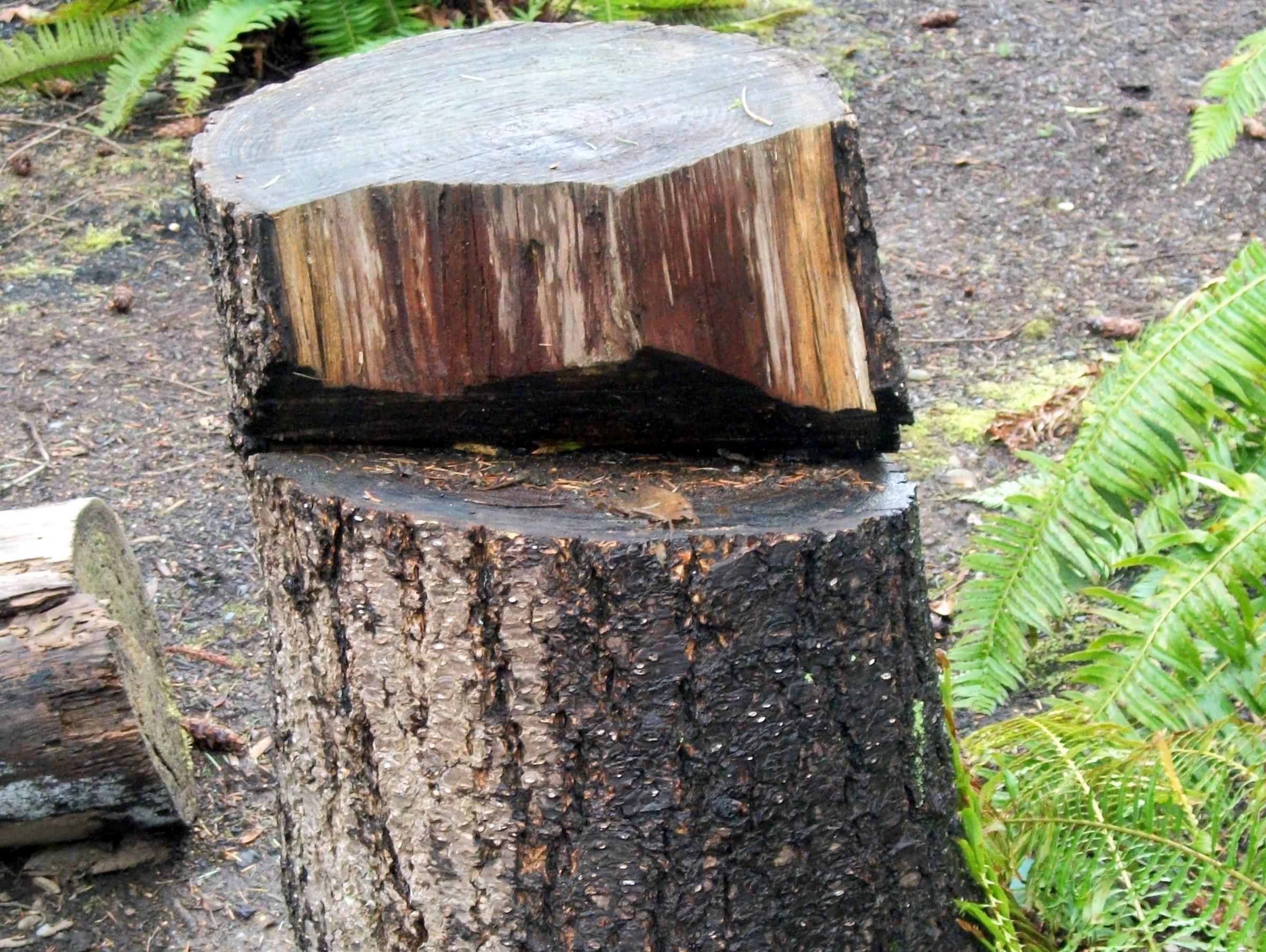 Cut Tree Stump, Cut, Stump, Tree, Wood, HQ Photo