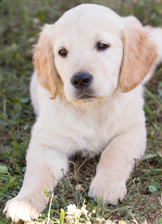 Cute, Animal, Dog, Friend, Loyal, HQ Photo