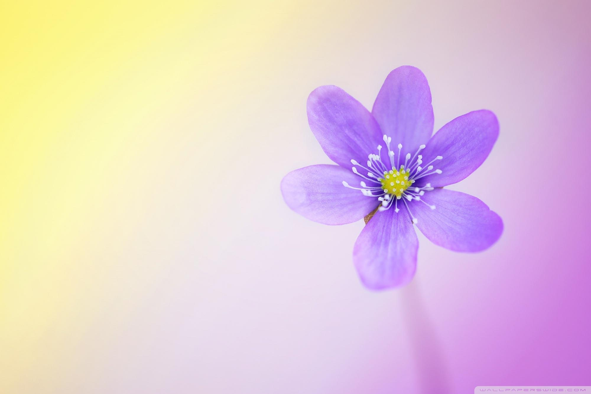 Cute and Colorful ❤ 4K HD Desktop Wallpaper for 4K Ultra HD TV ...
