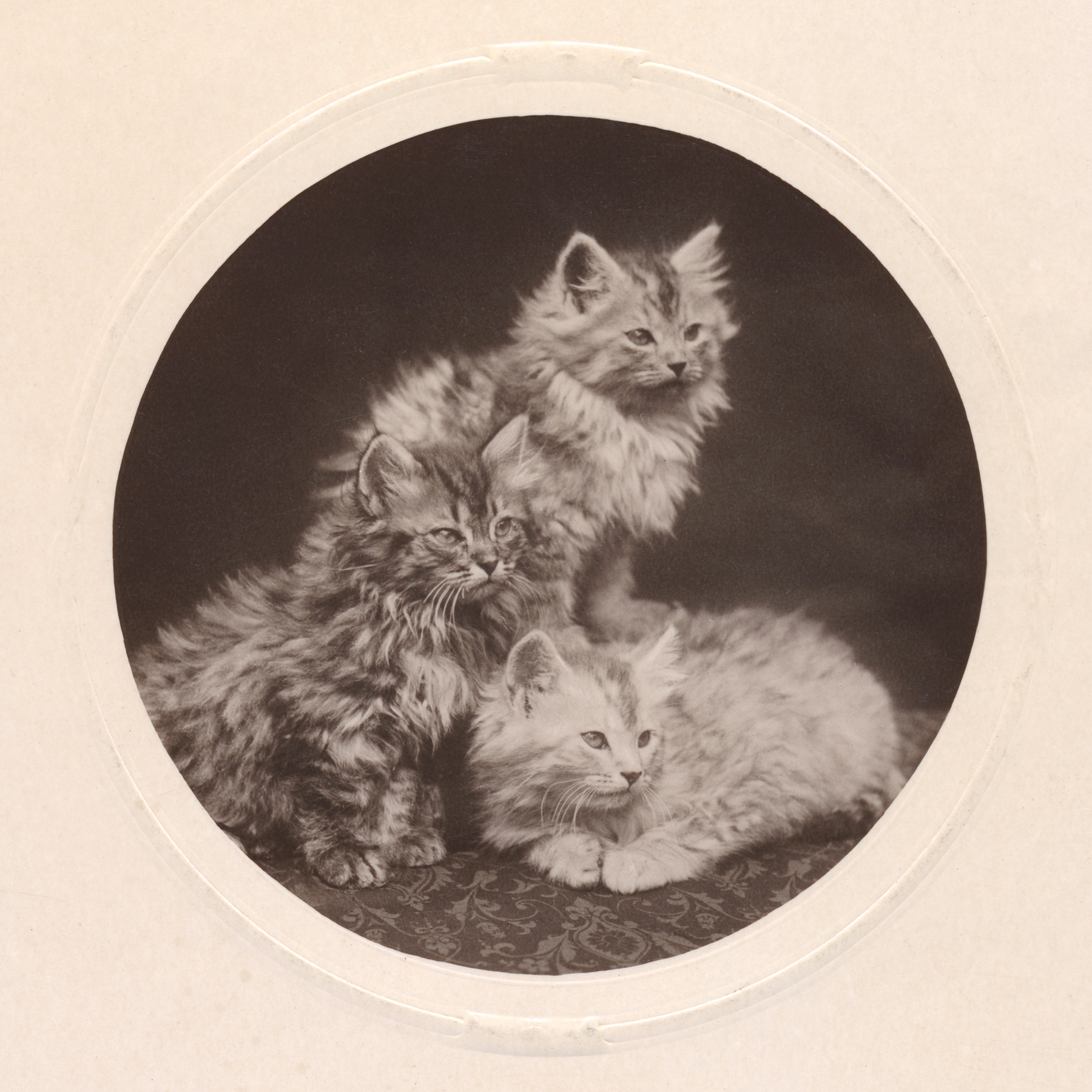 Cute antique kittens - circa 1908 photo