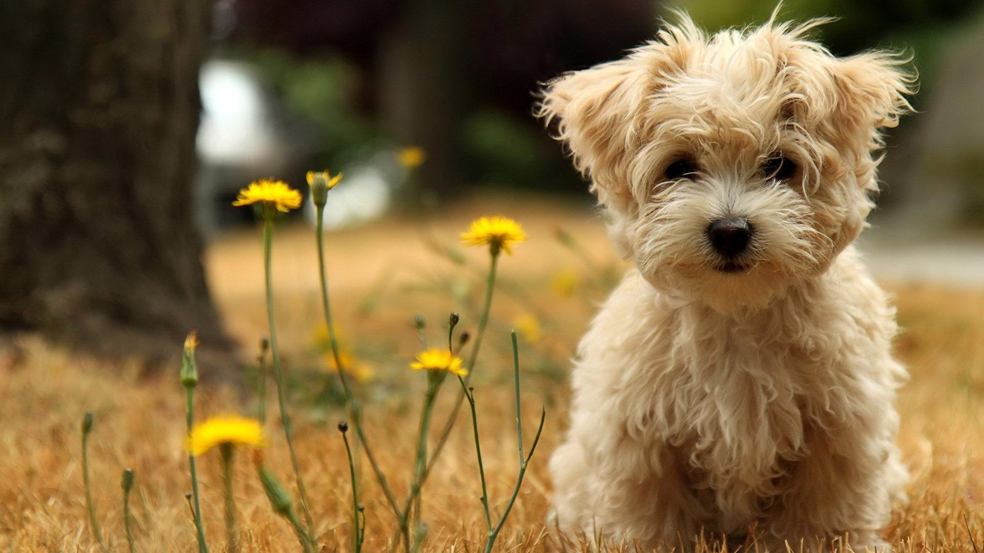 Top 12 Cutest Dog Breeds List - Listovative