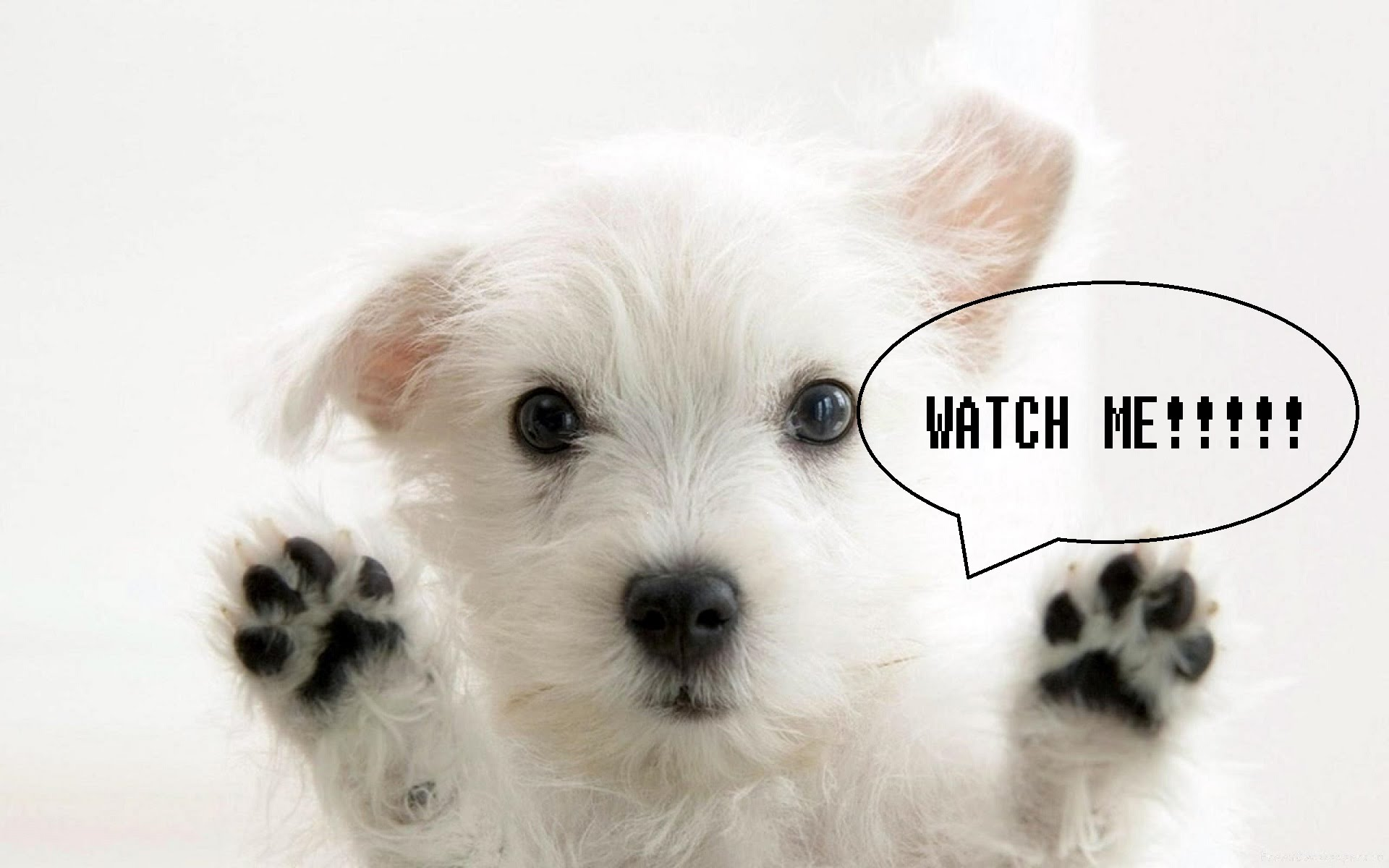 Super Super Super Cute Dog Video !! Lucy Kawai - YouTube