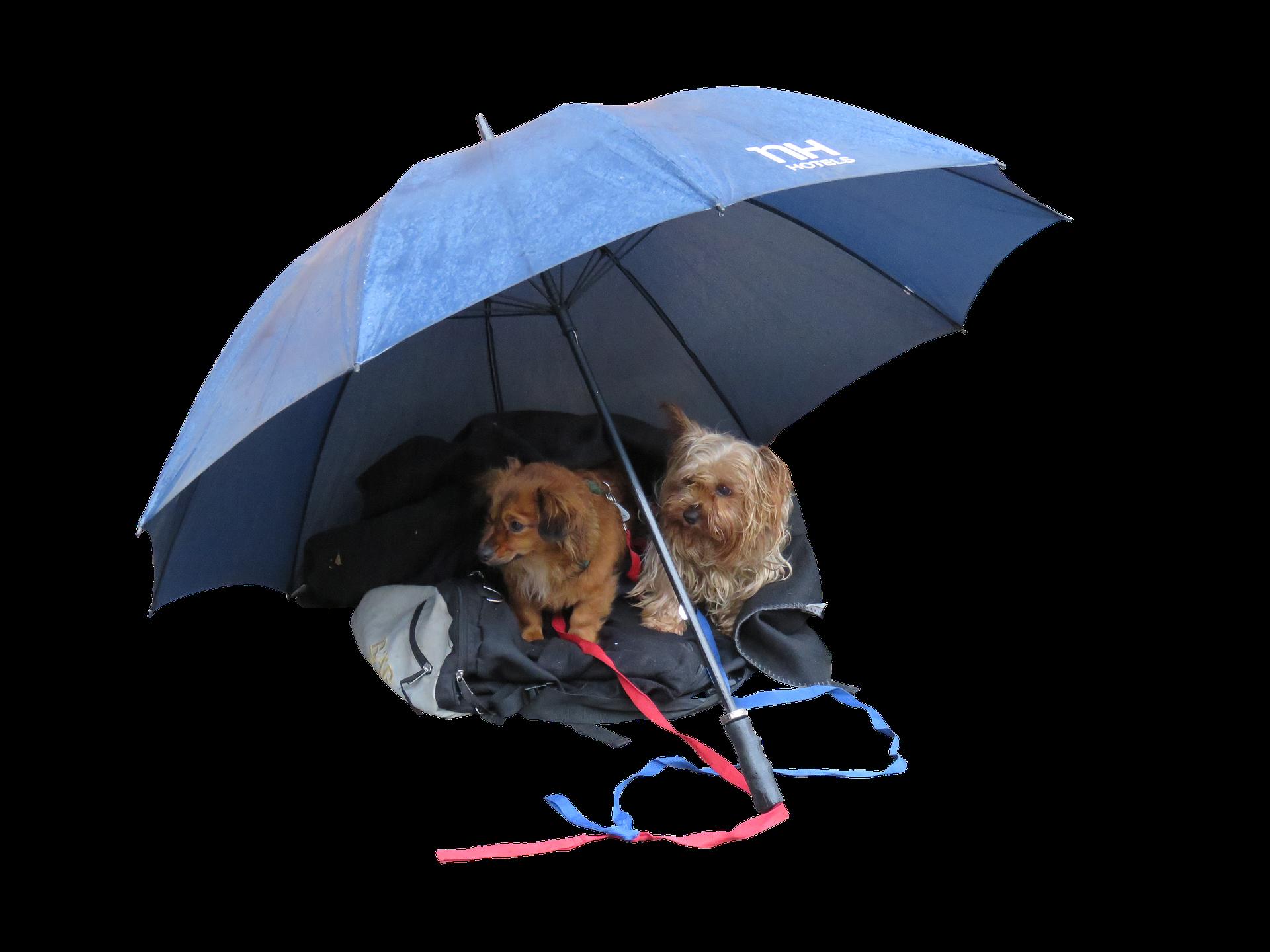 Cute Dogs, Animal, Cute, Dog, Free dog photos, HQ Photo