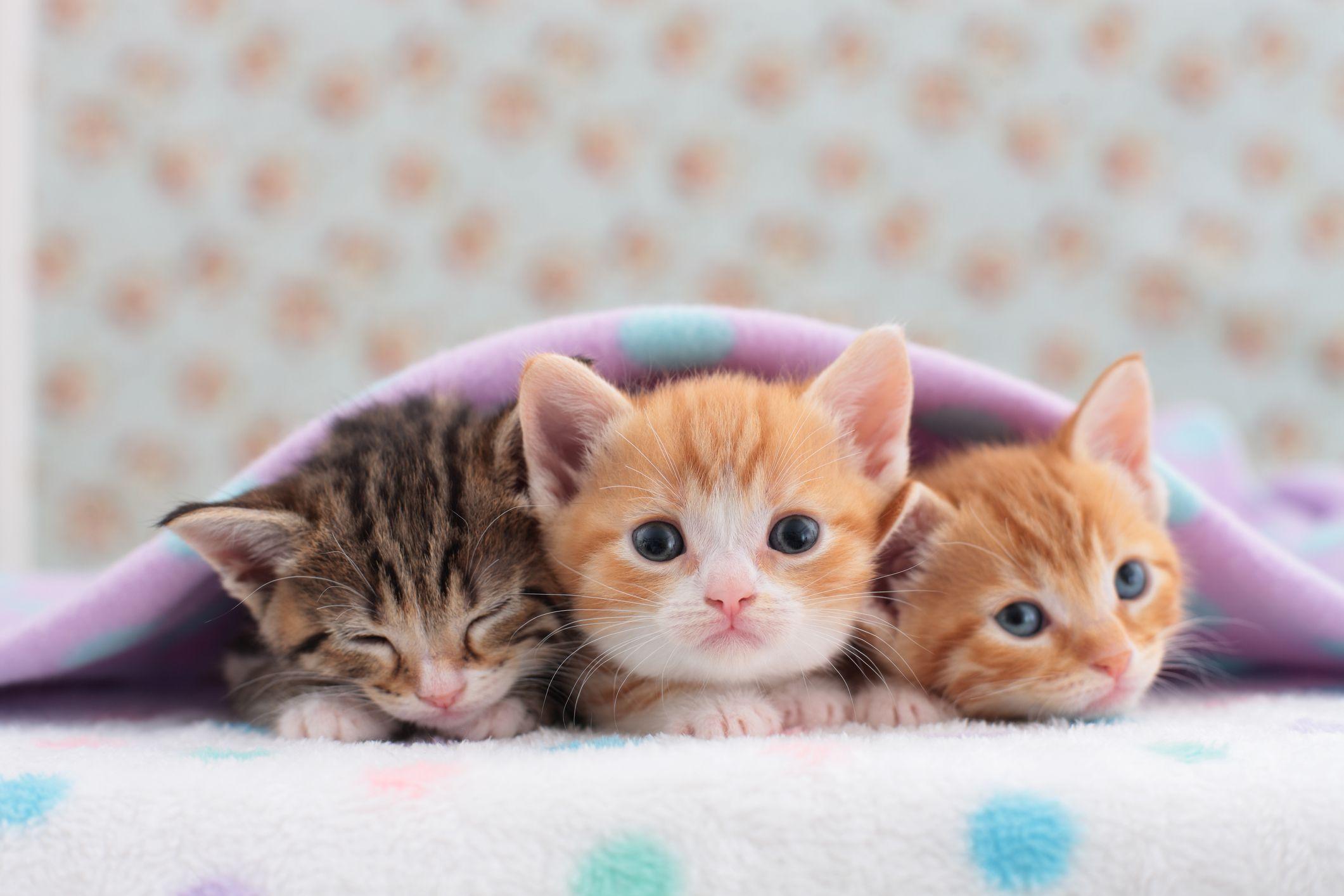 free photo cute kitten kitten cute cat free download jooinn