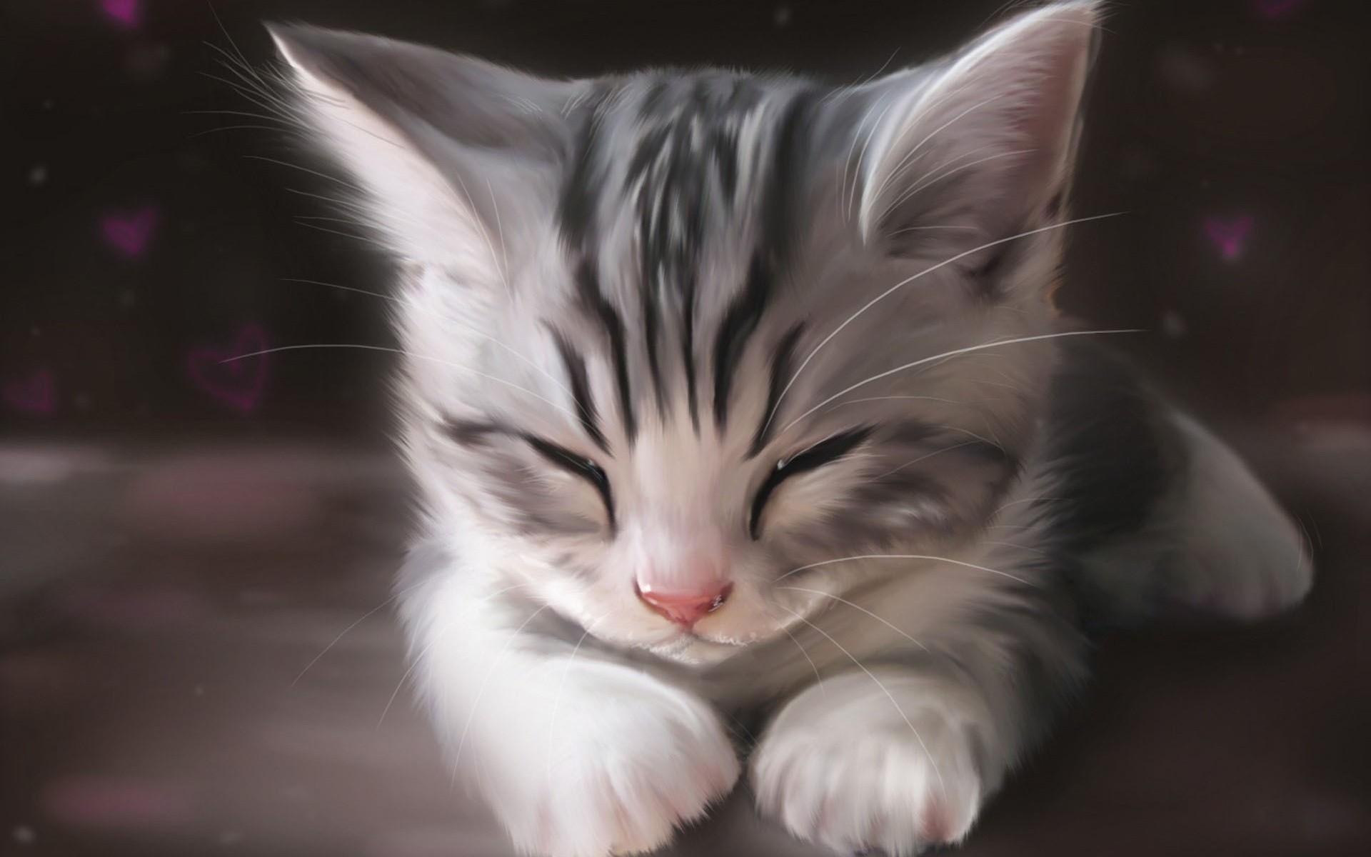 Image - Cute-kitty-318923.jpg | Whatever you want Wiki | FANDOM ...
