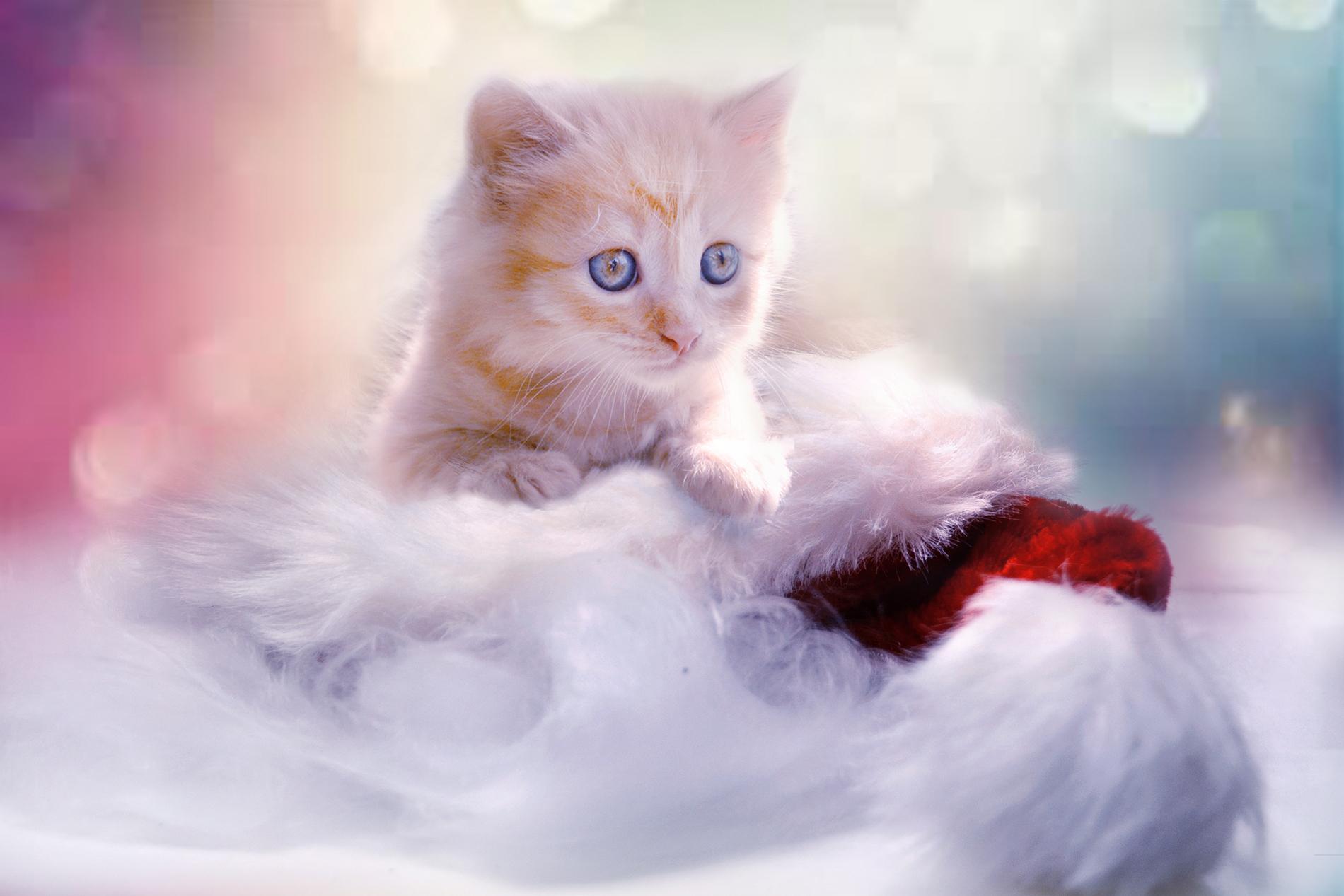 Cute Kitten 53934 - Kitty - Animal