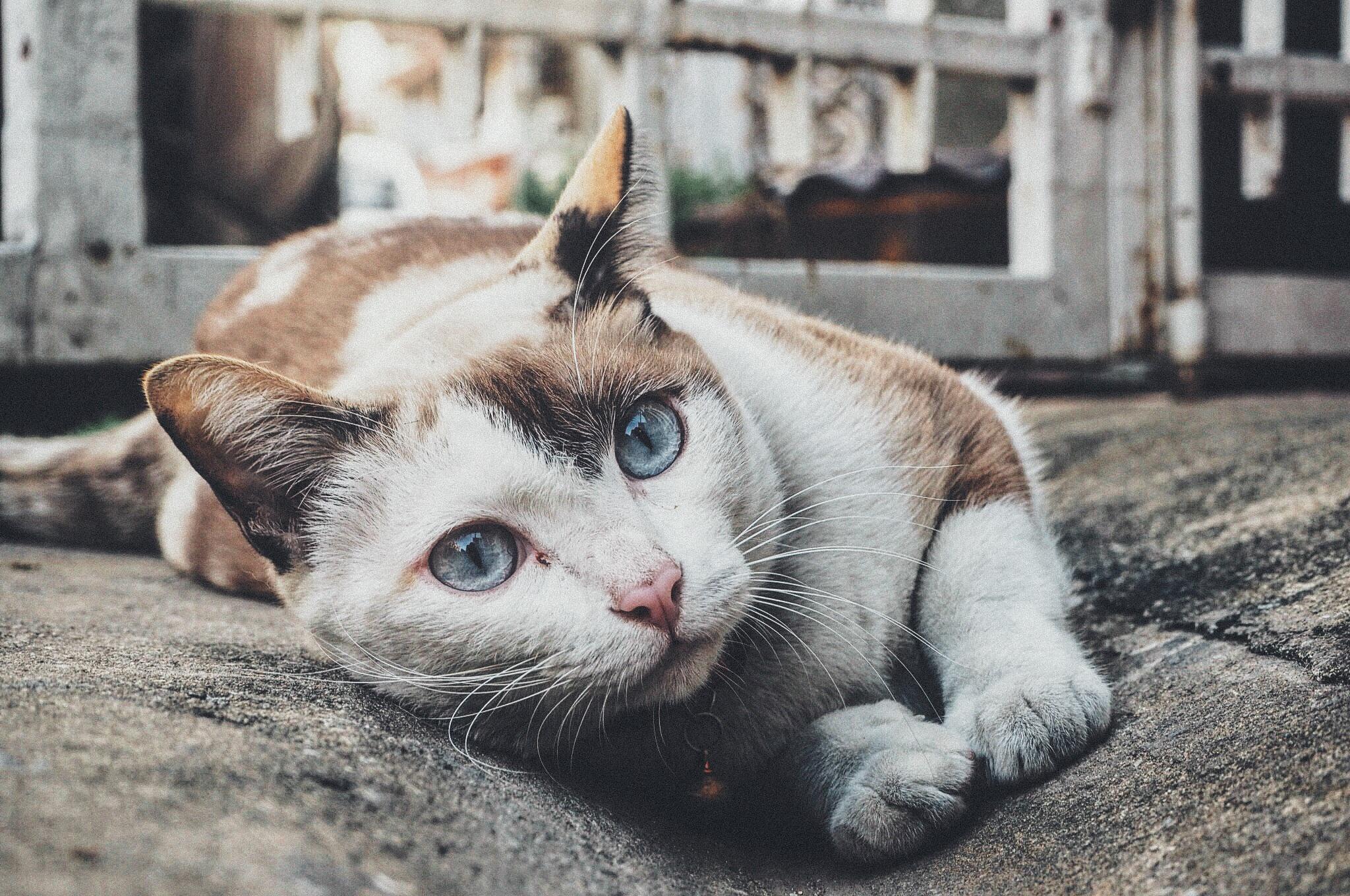 Cute Kitty, Animal, Cat, Friend, Kitty, HQ Photo