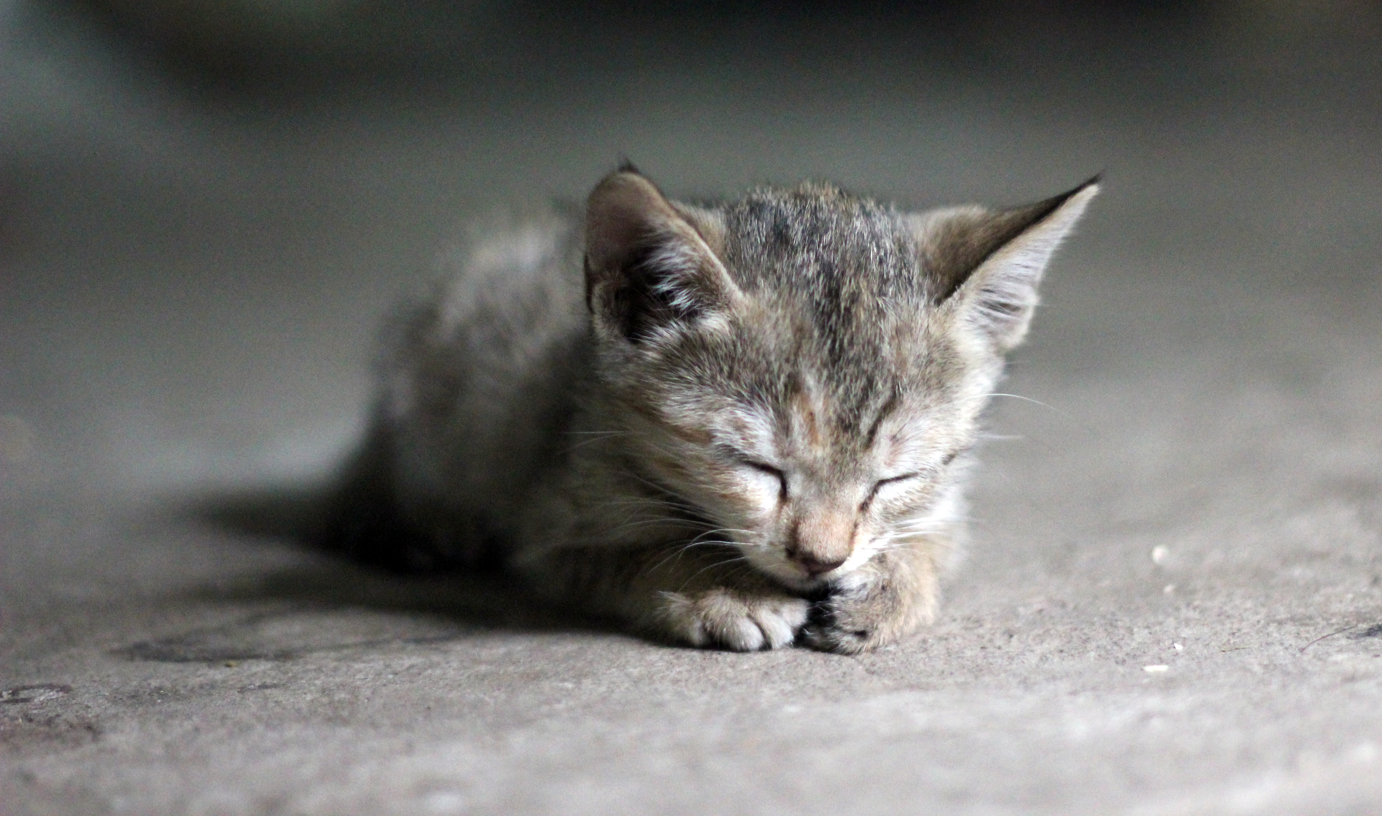 Cute Kitty Cat : Public Domain Pictures
