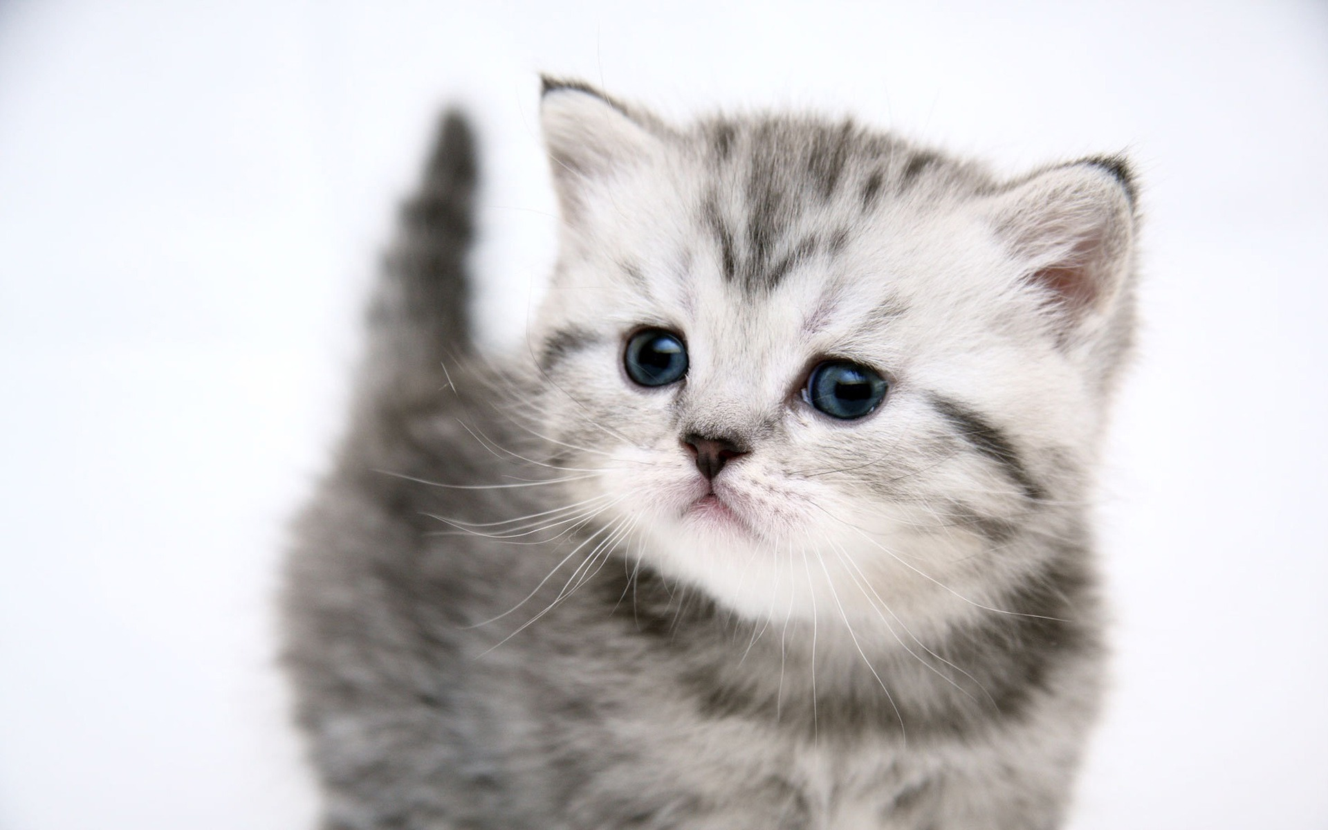 Hello Kitty Pictures: 1920x1200 Small cute kitty