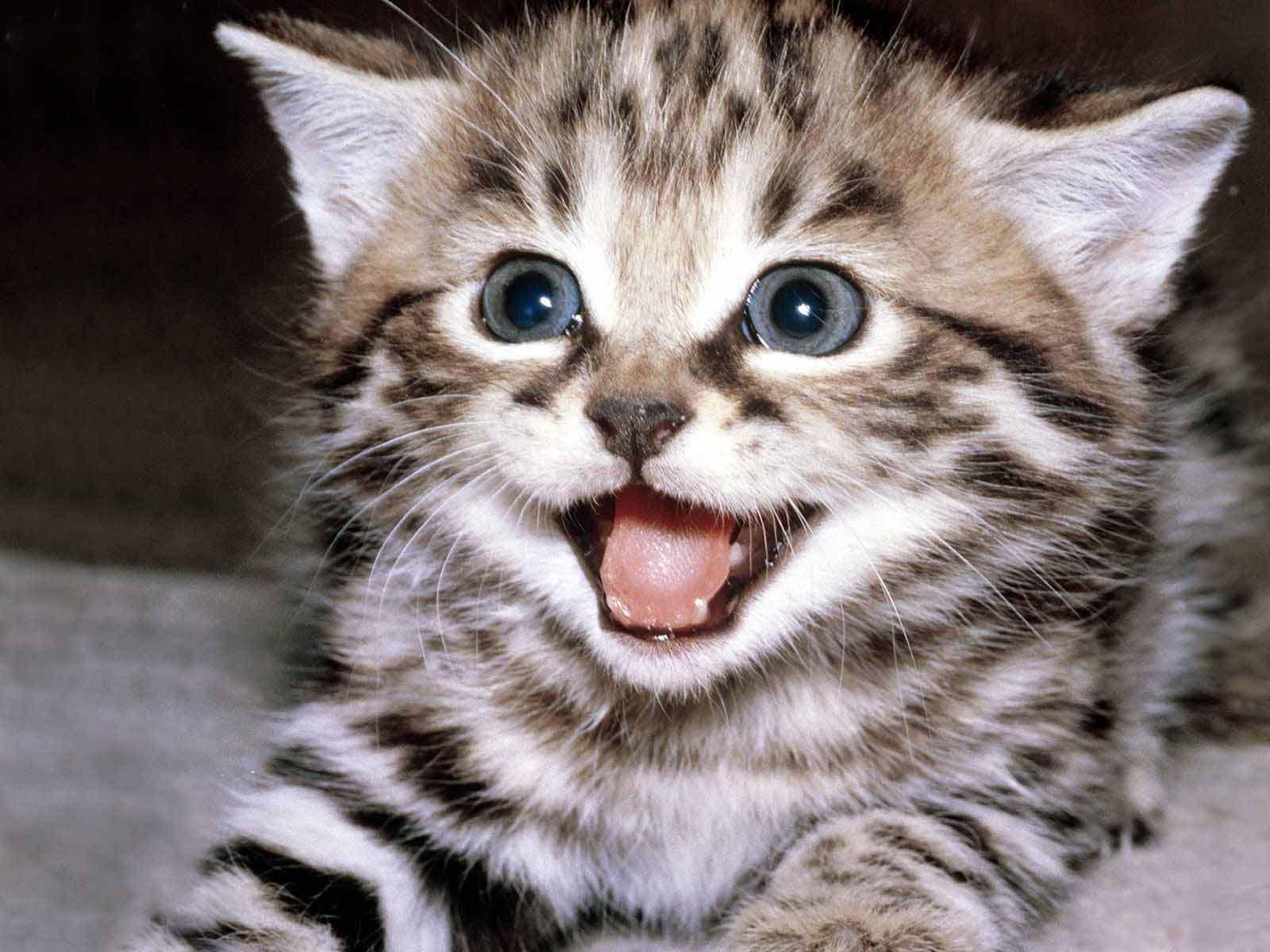 Meet Cute Kitty - VCH NewsVCH News |