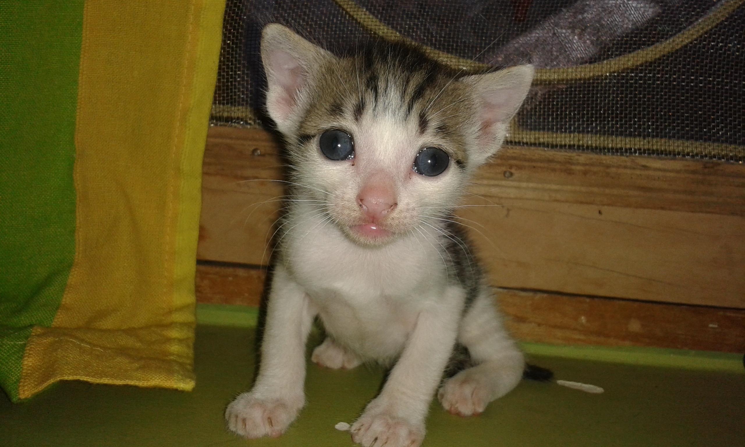 Cute kitty, Cat, Kitten, Kitty, Young, HQ Photo