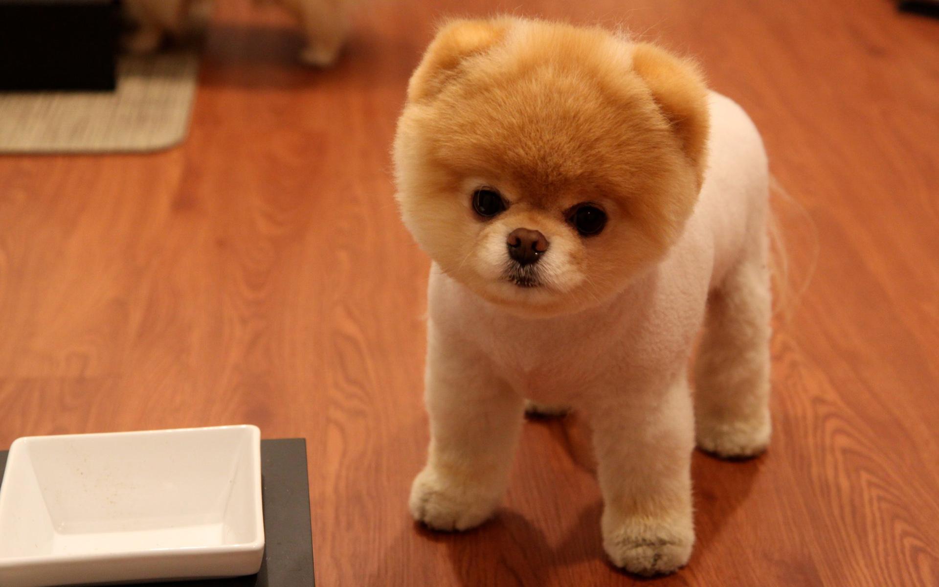 free photo: cute little dog - fur, little, pet - non-commercial