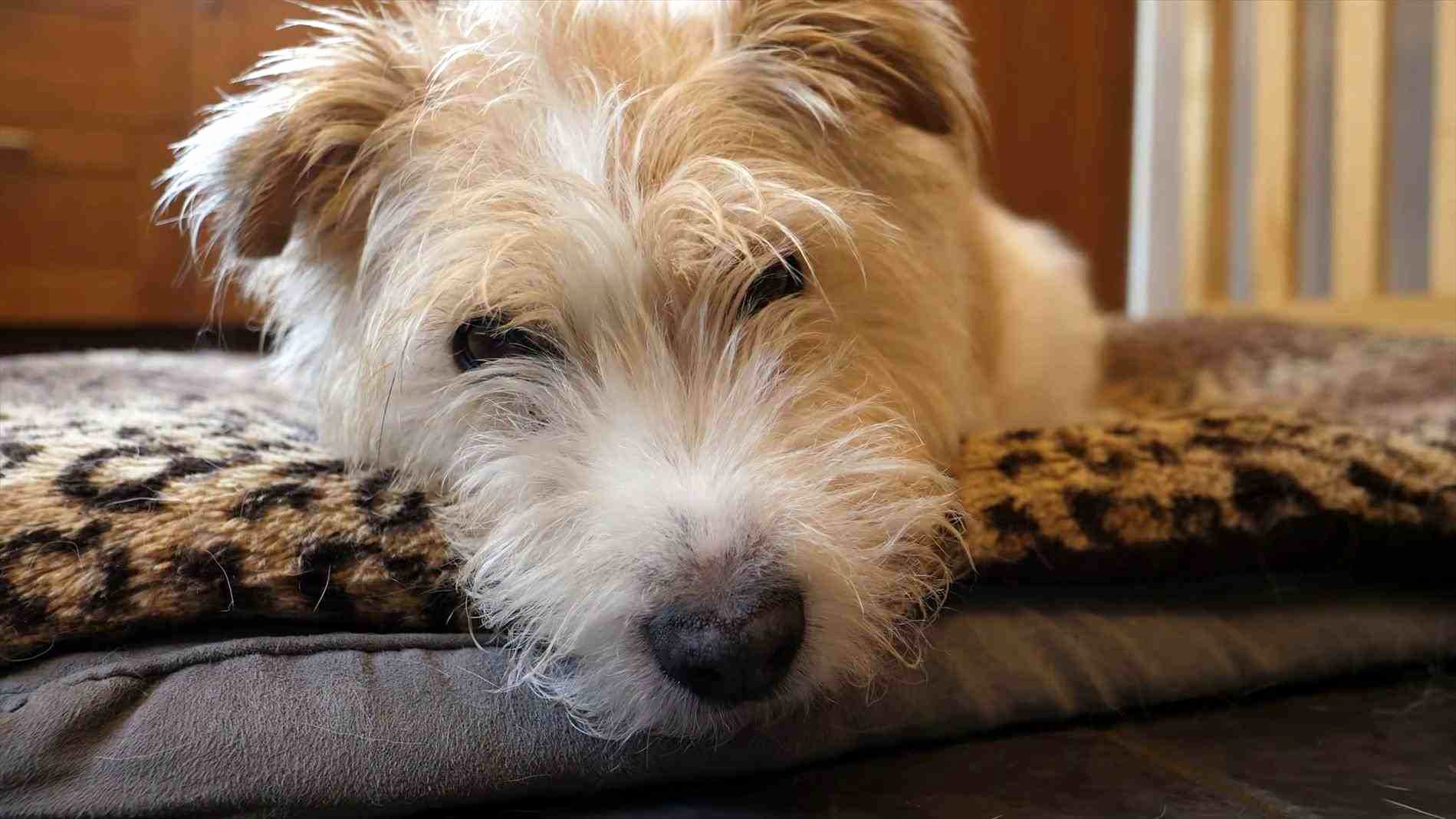 Fresh Scruffy Dog Beds - Dogs World