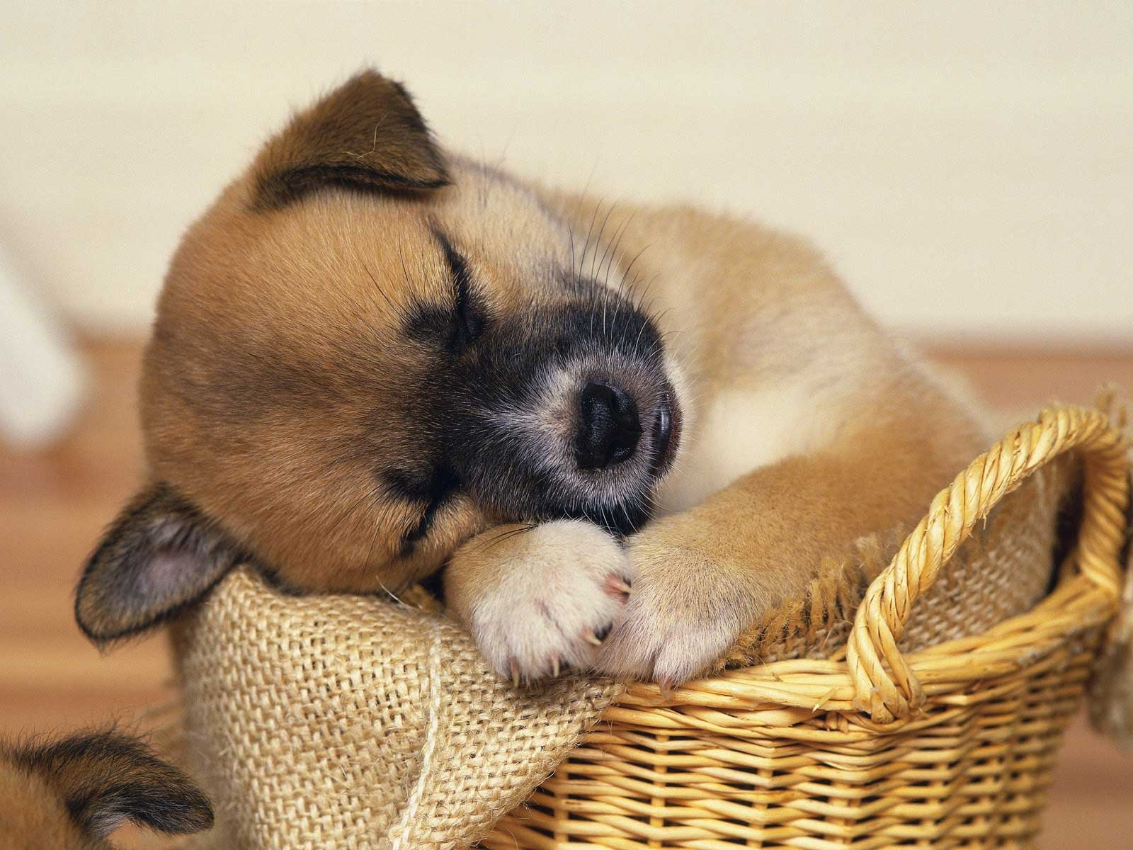 CUTE-SLEEPING-PUPPIES31.jpg | p u p s | Pinterest | Baby puppies ...