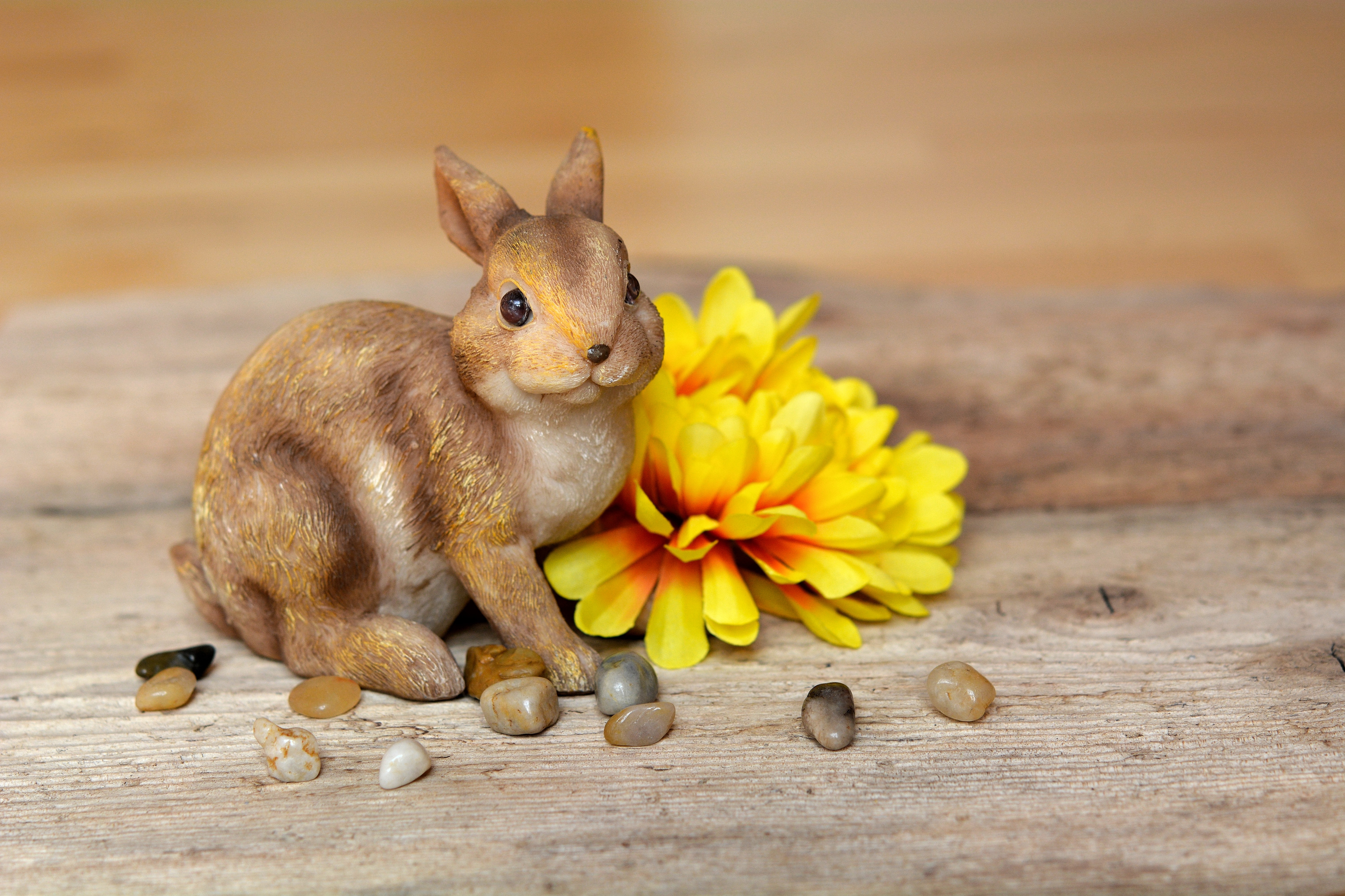 Cute, Bunny, Flower, Fresh, Freshness, HQ Photo