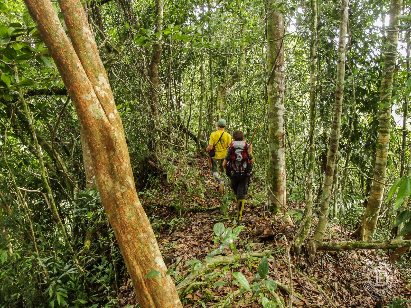 The Forney Flyer: Trekking With My Son -- The Pujungan Hulu ...