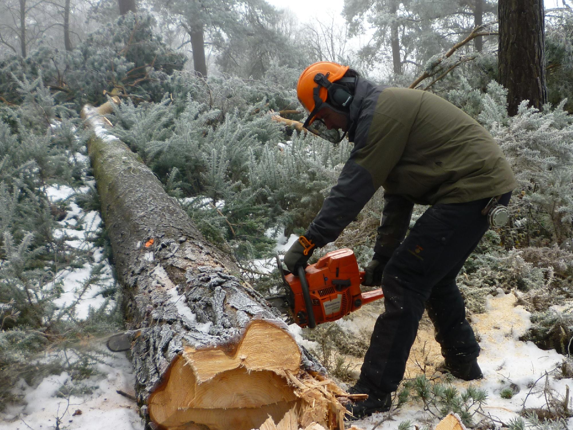 December | 2010 | Speckled Wood
