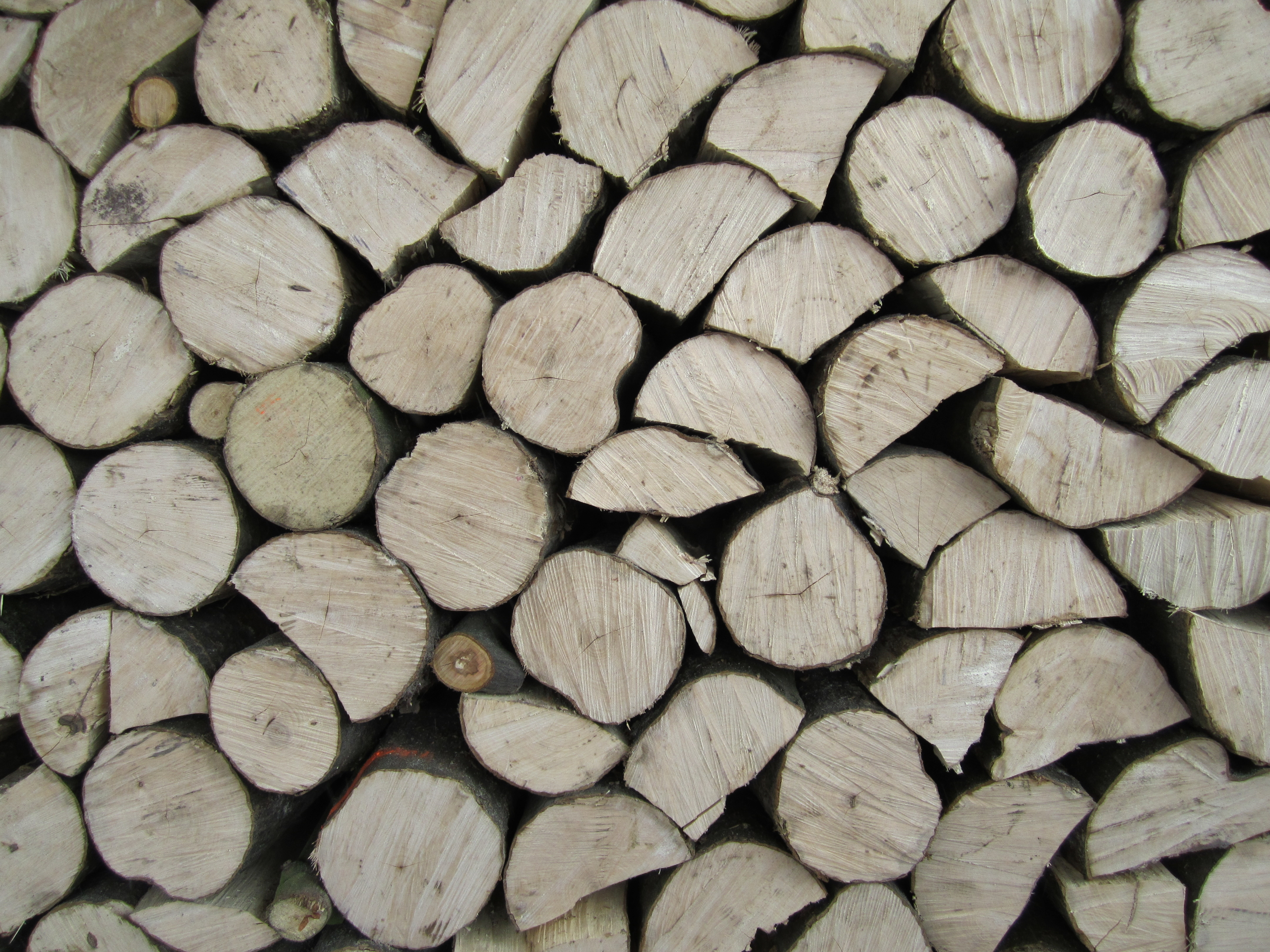Cutting Wood with Robert Frost | Andrew B Lang
