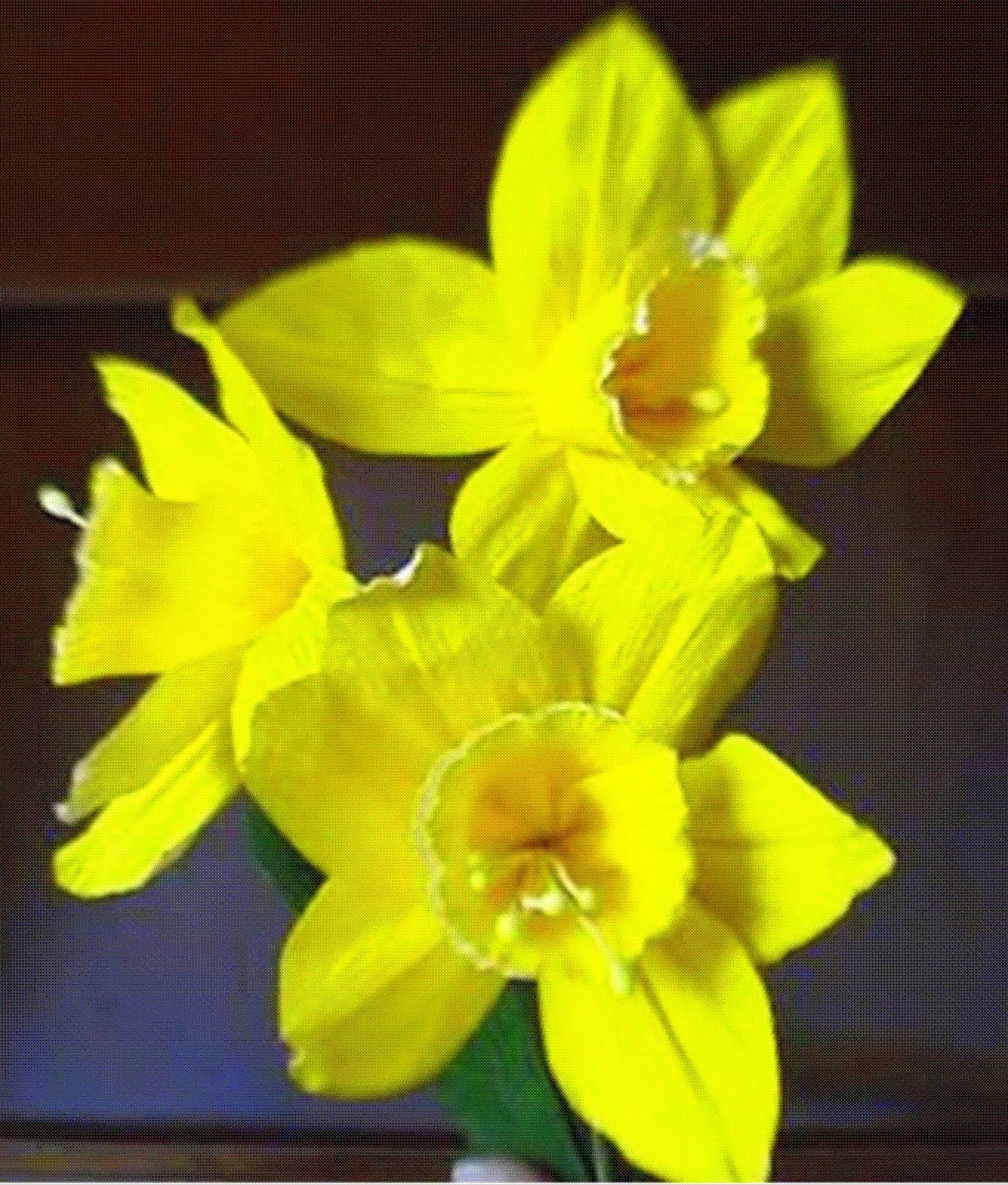 How to make Paper flowers Daffodils / Narcissus (Flower # 7) - YouTube