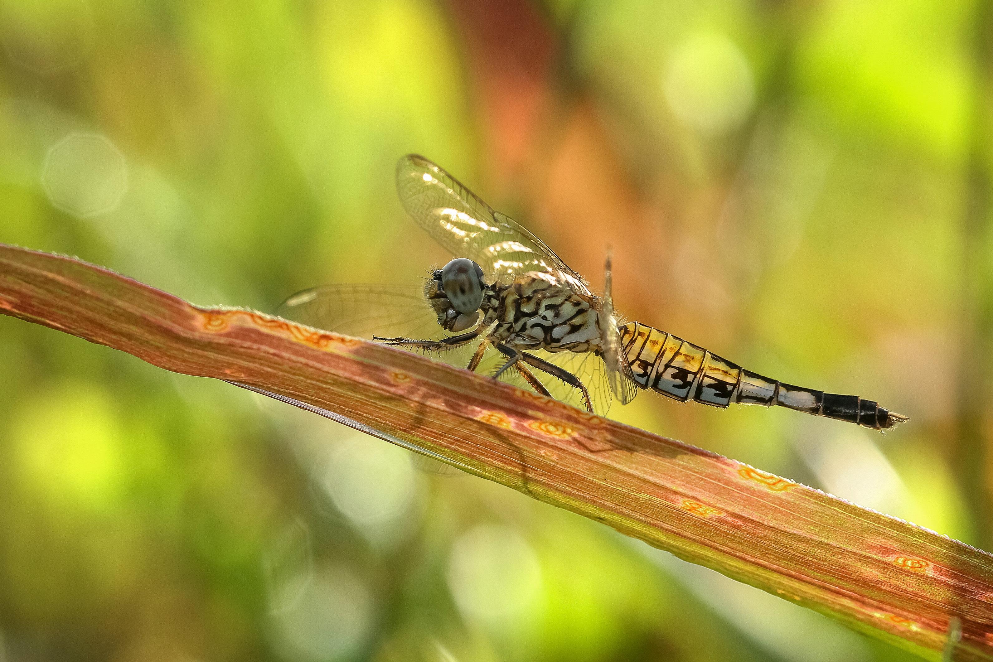 Dagonfly photo