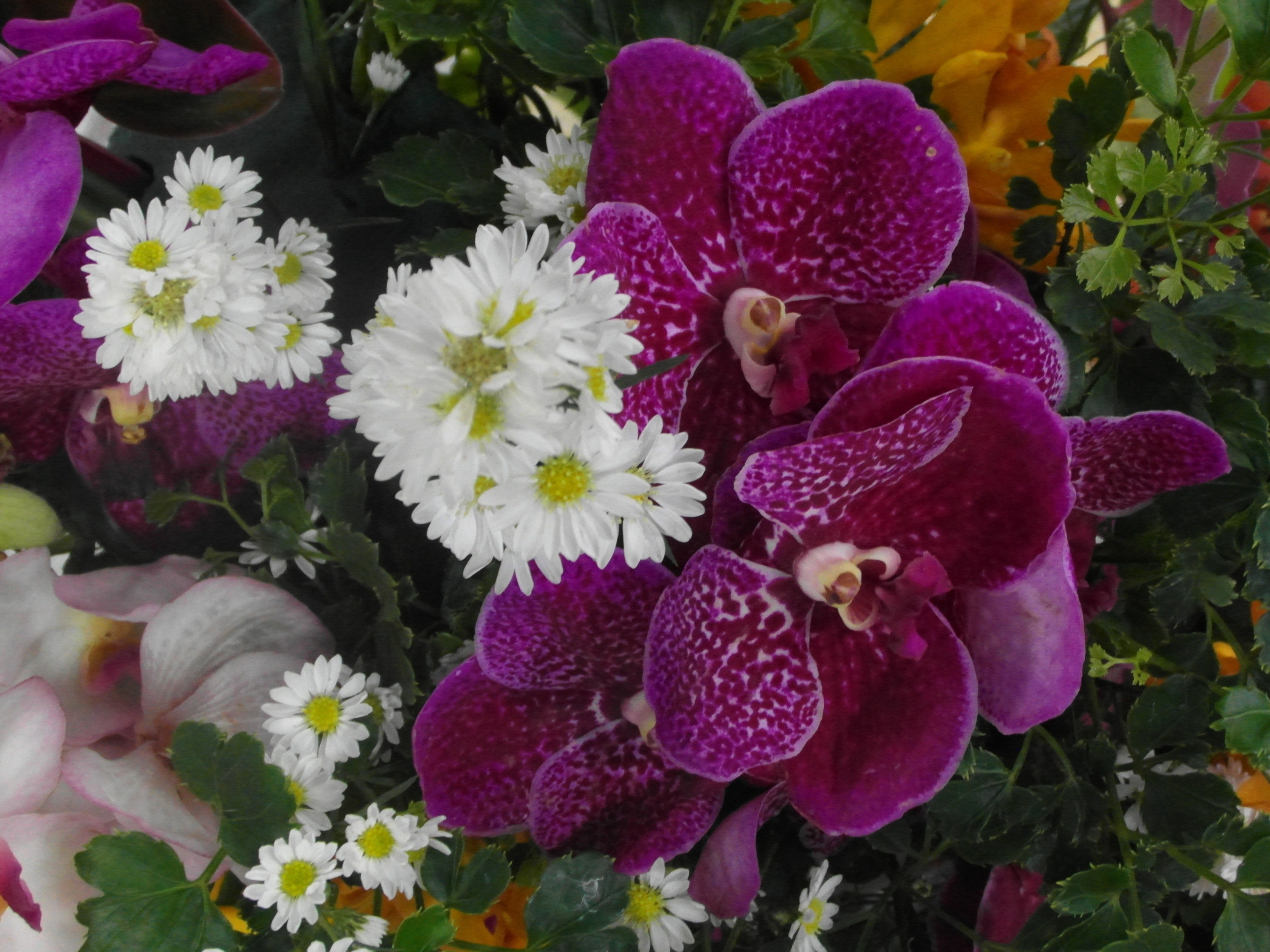 Daisy and orchid flower arrangement photo