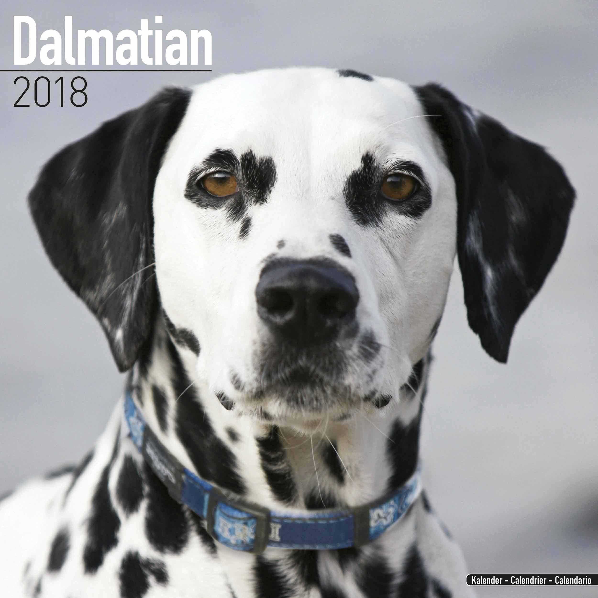 Dalmatian Calendar 2018 - Calendar Club UK
