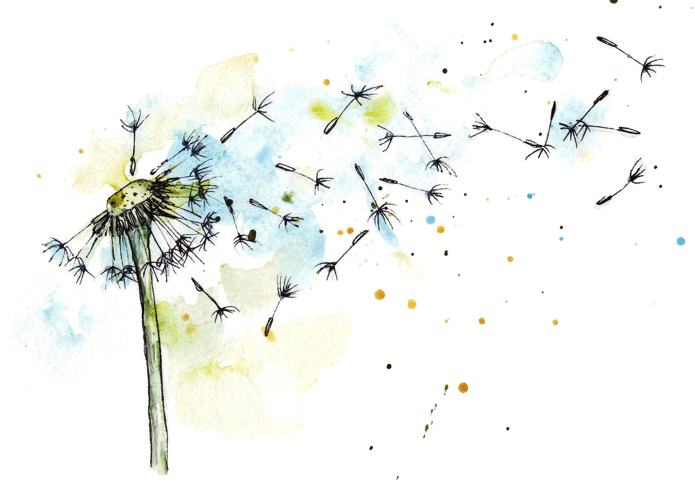 Dandelion in watercolor and ink ~ Illustrations ~ Creative Market