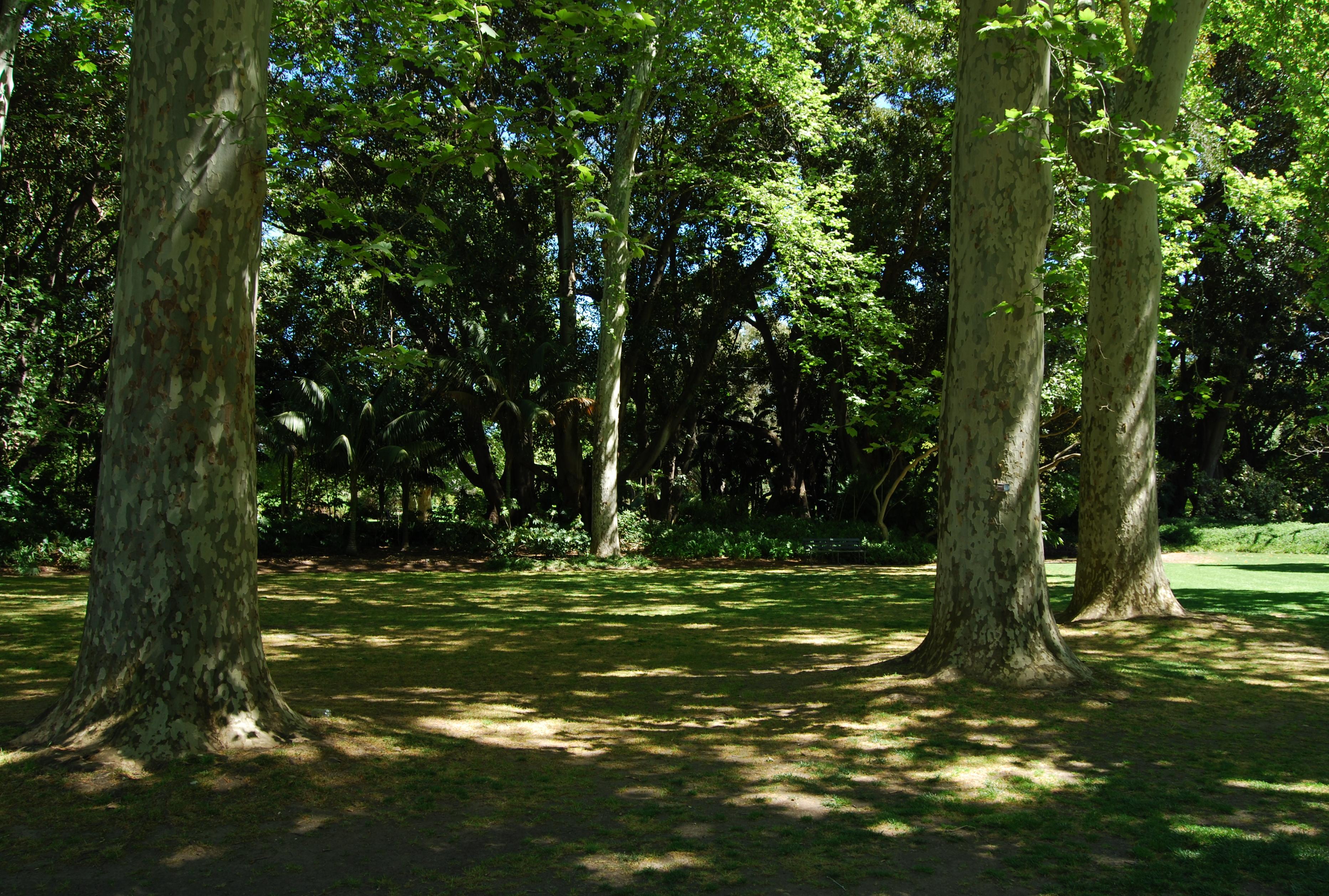 File:Dappled Shade Adelaide Botanic Garden.JPG - Wikimedia Commons