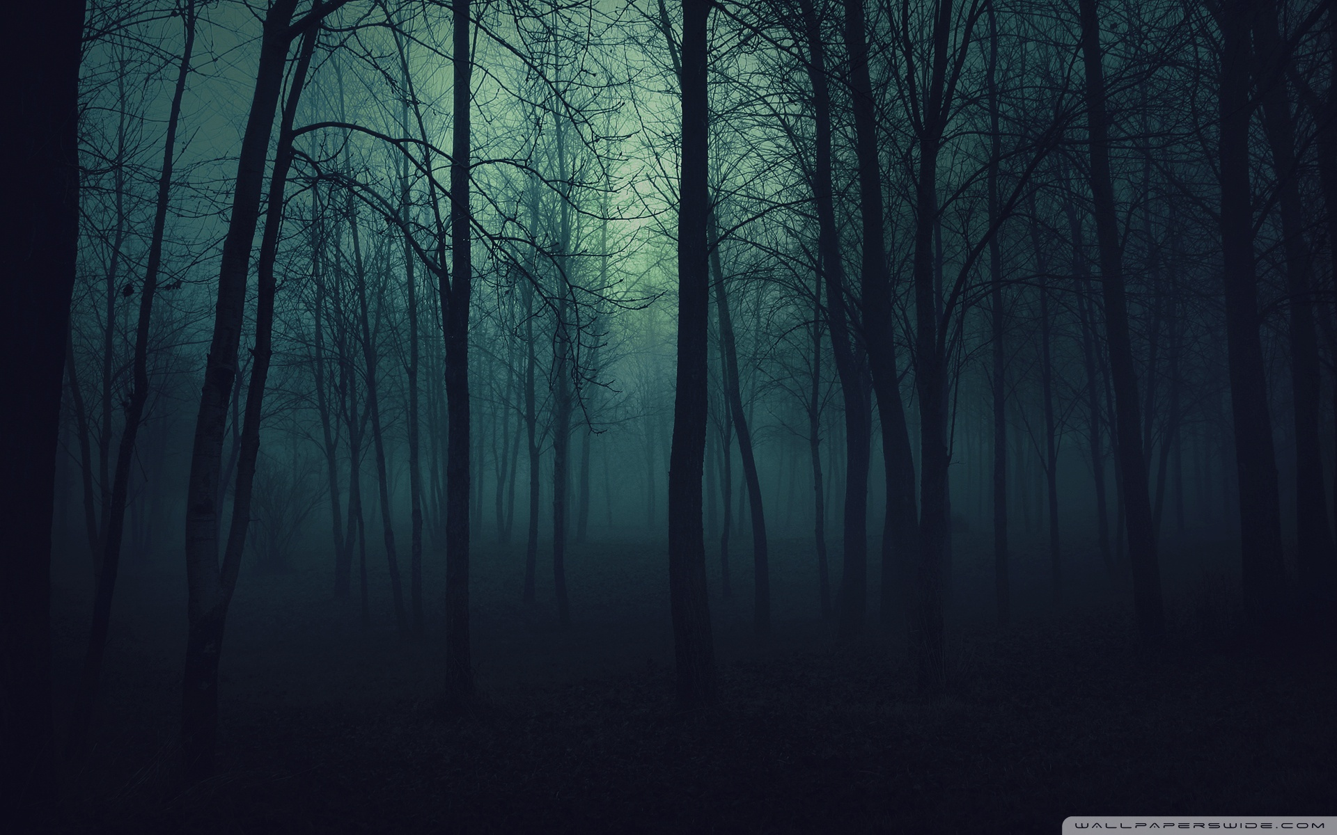 Dark Forest HD Wallpaper, Background Images