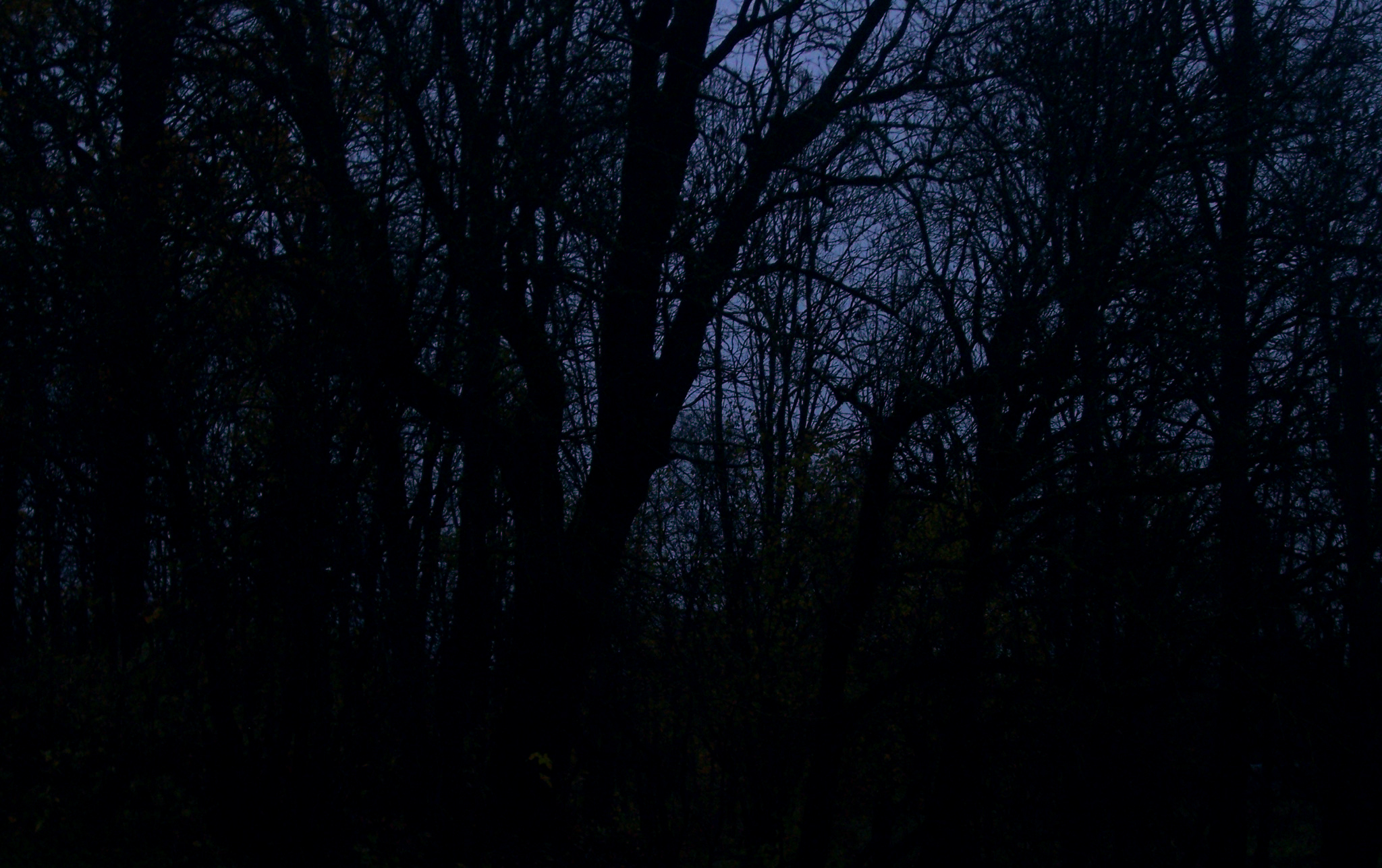 Dark forest, Alone, Cold, Dark, Fear, HQ Photo