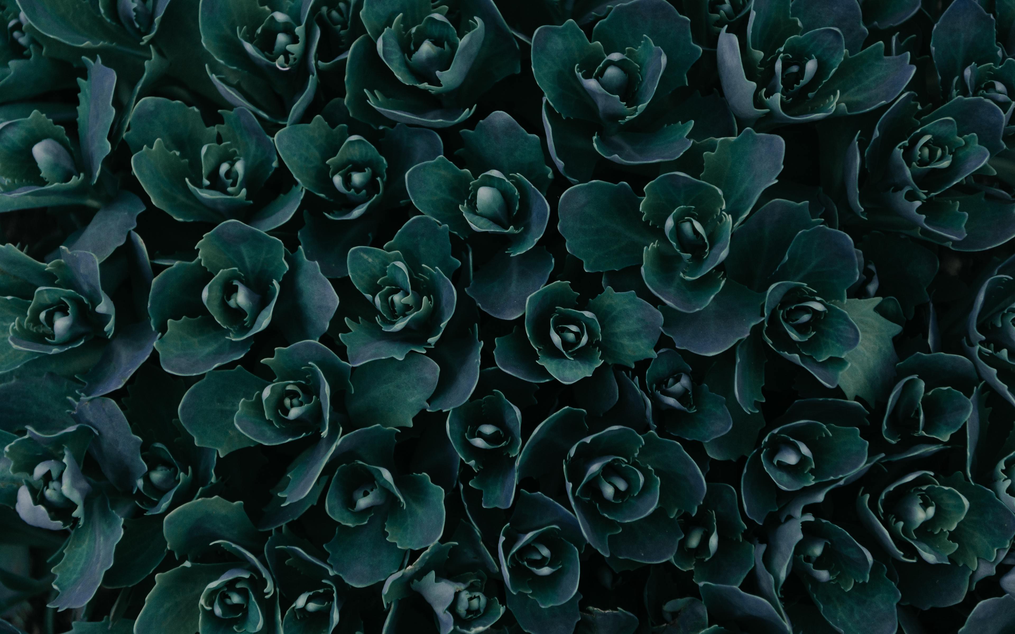 Dark green plants photo