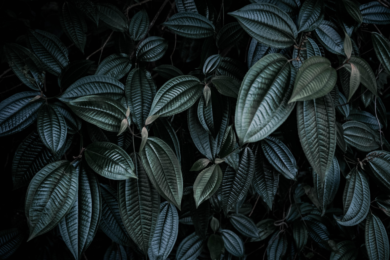 Dark leaves photo