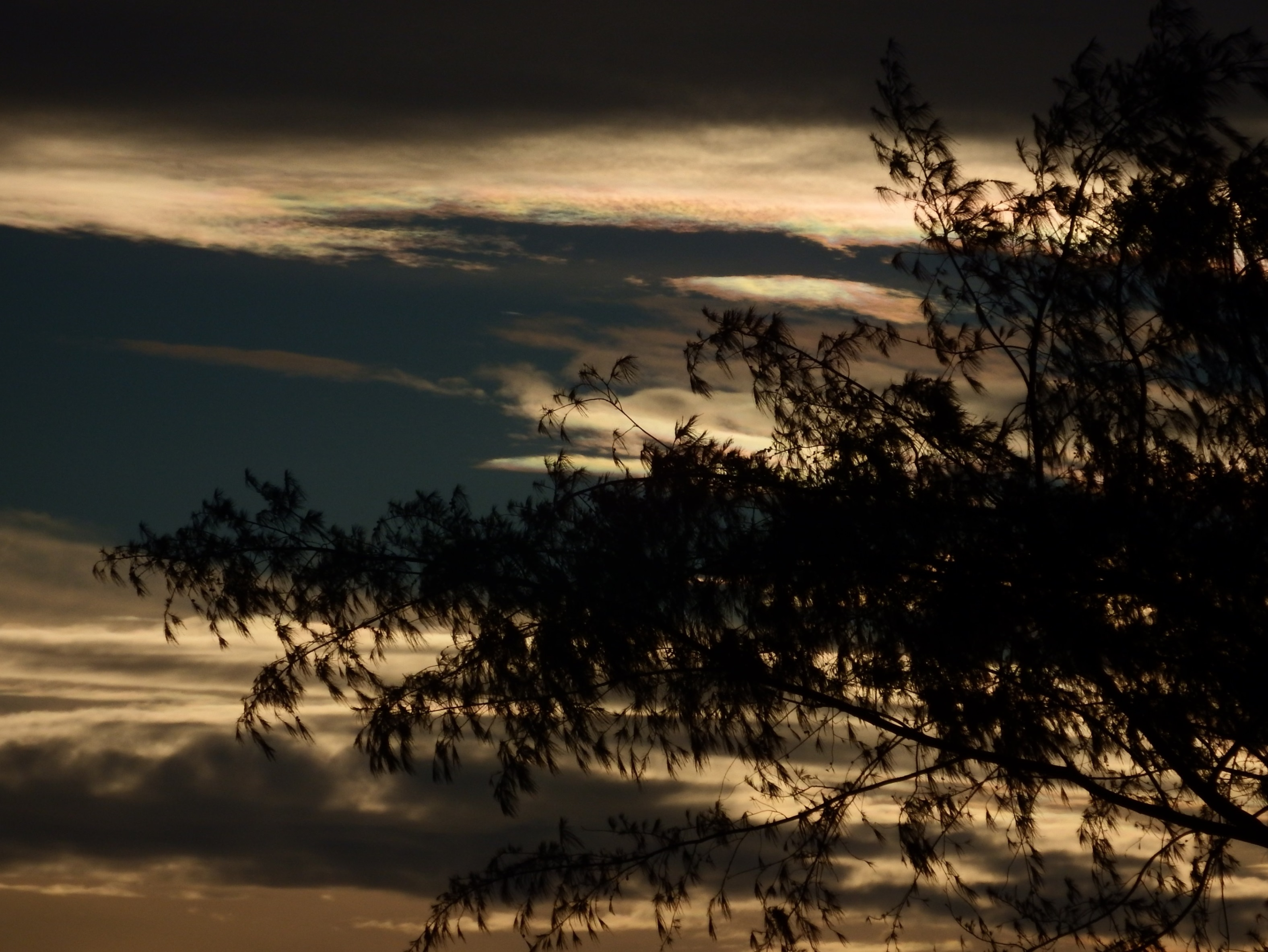 Dark Skies Silhouette, Black, Branches, Clouds, Cloudy, HQ Photo