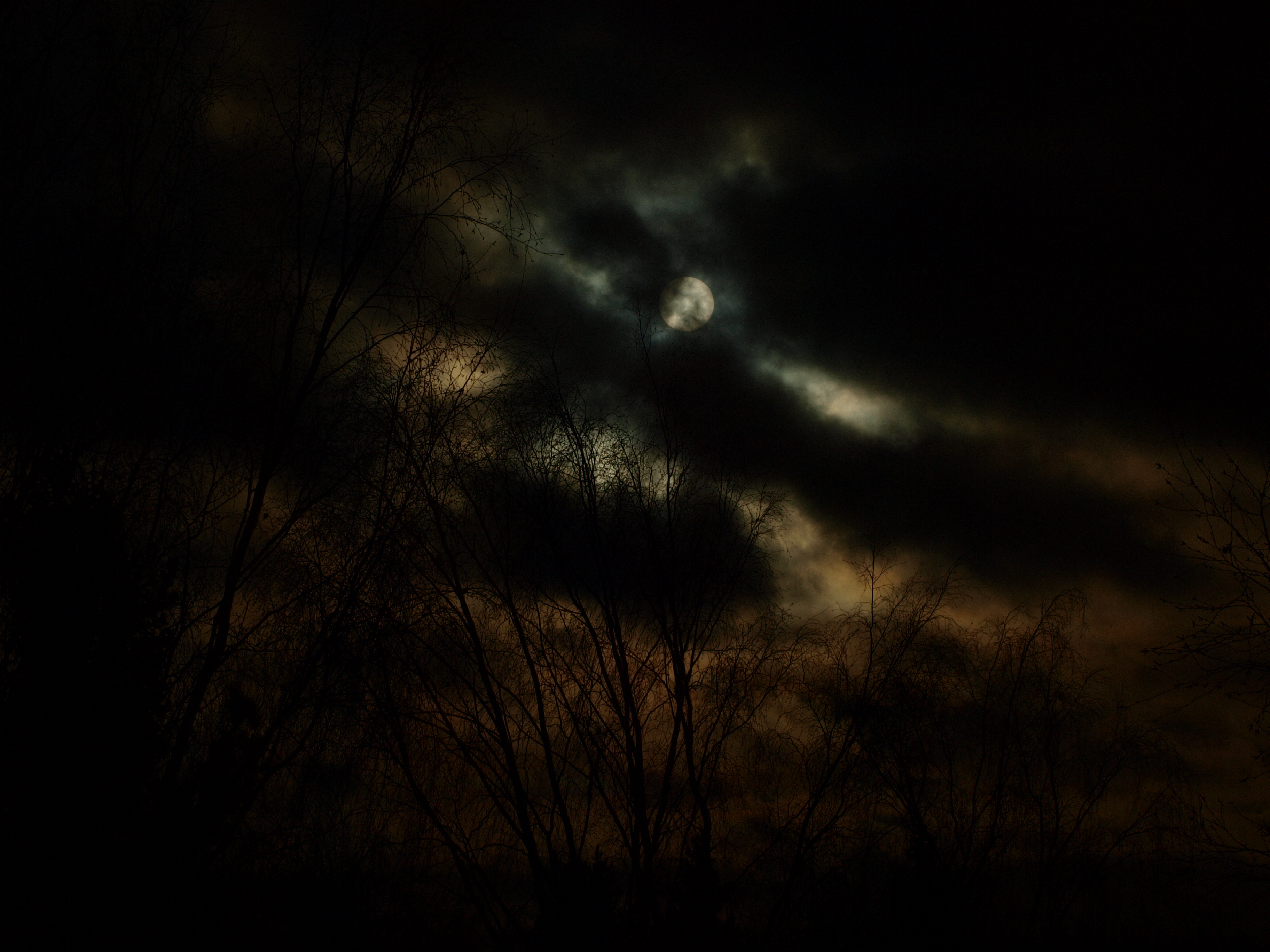 Dark sun, Sun, Trees, Sky, Light, HQ Photo