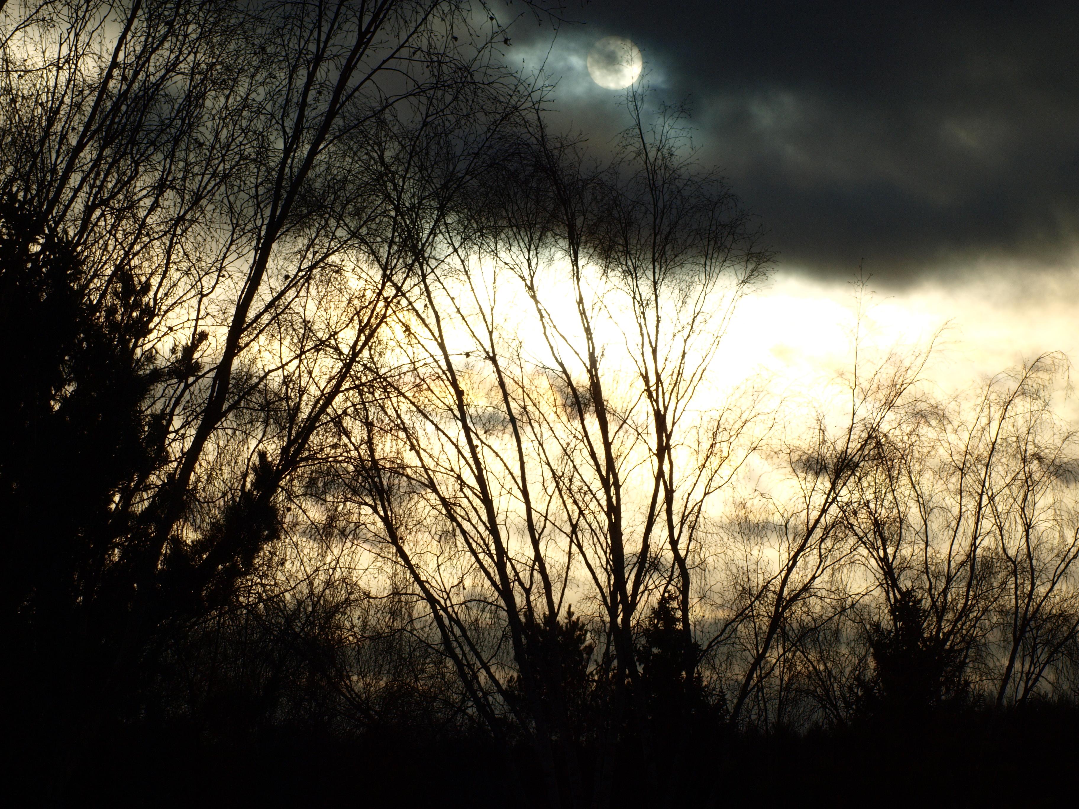 Dark sun, sky, trees, sun, light, HQ Photo