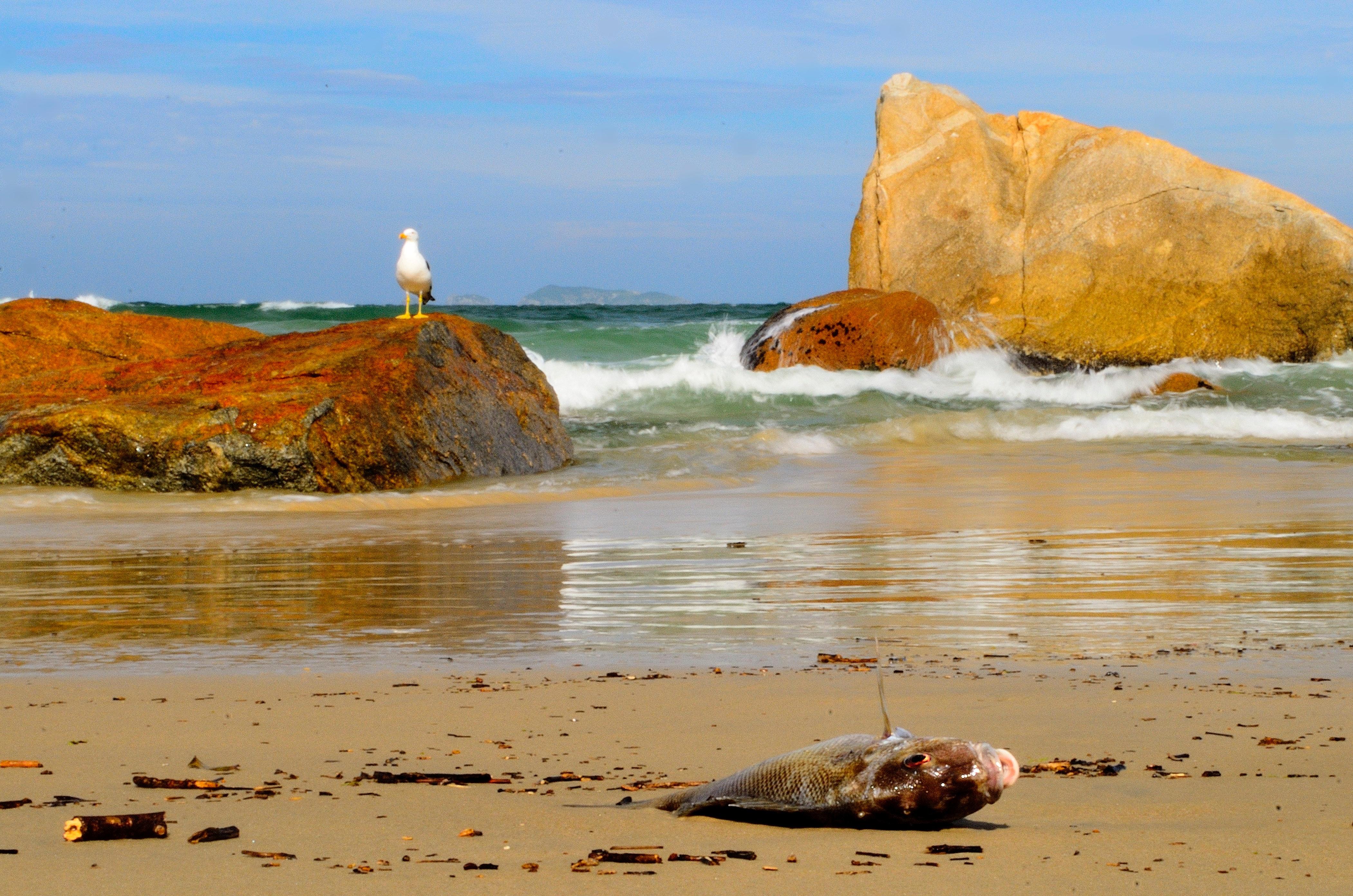 Dead fish on seashore during daytime photo